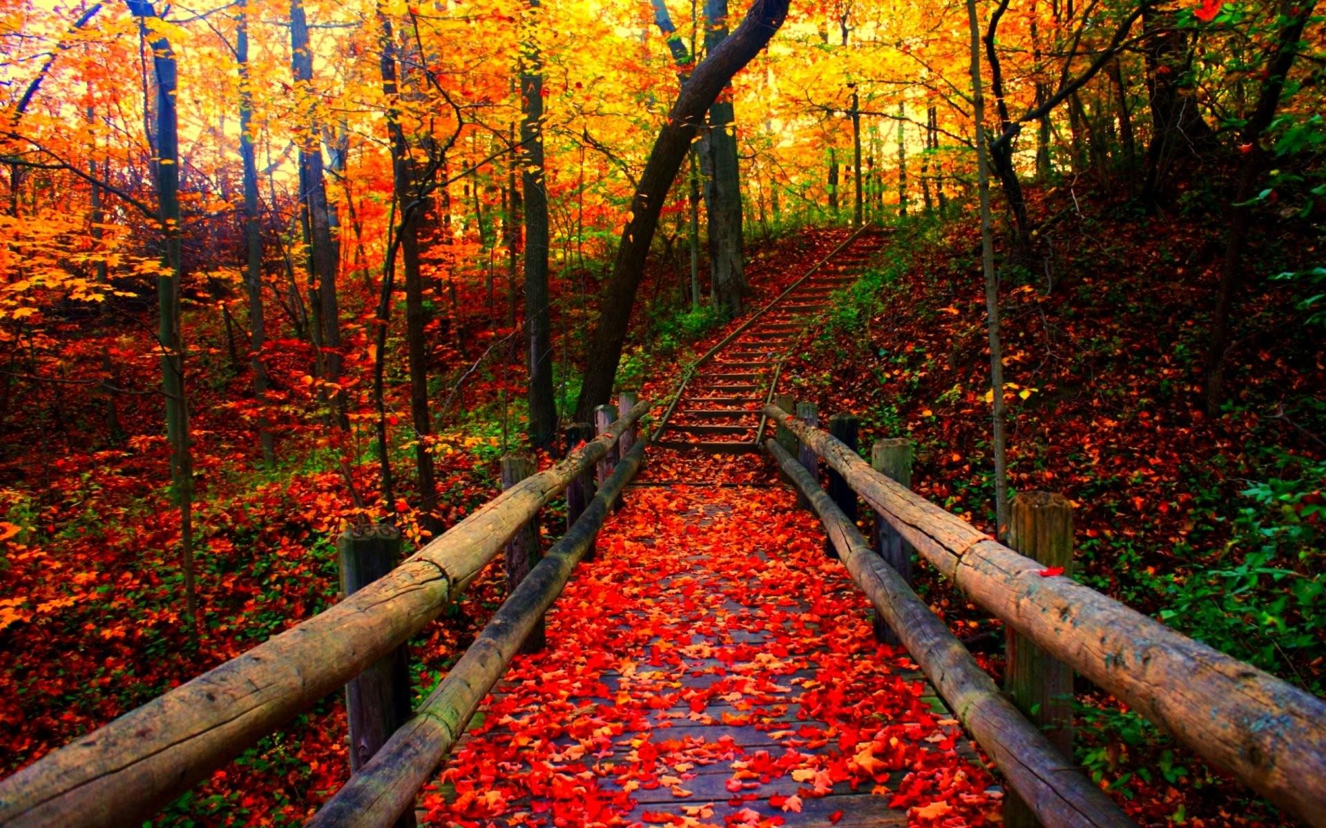 Leaves: Autumn Fall Season Leaf Tree Forest Seasons Nature Landscape ...