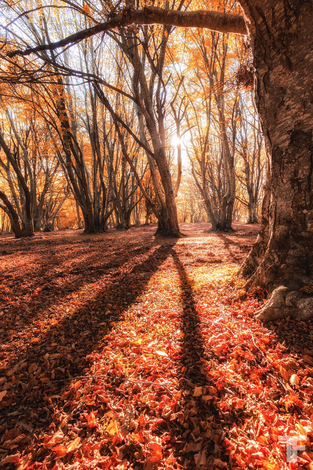 Fall Season Foliage Nature Gallery Portfolio - Thomas Farina