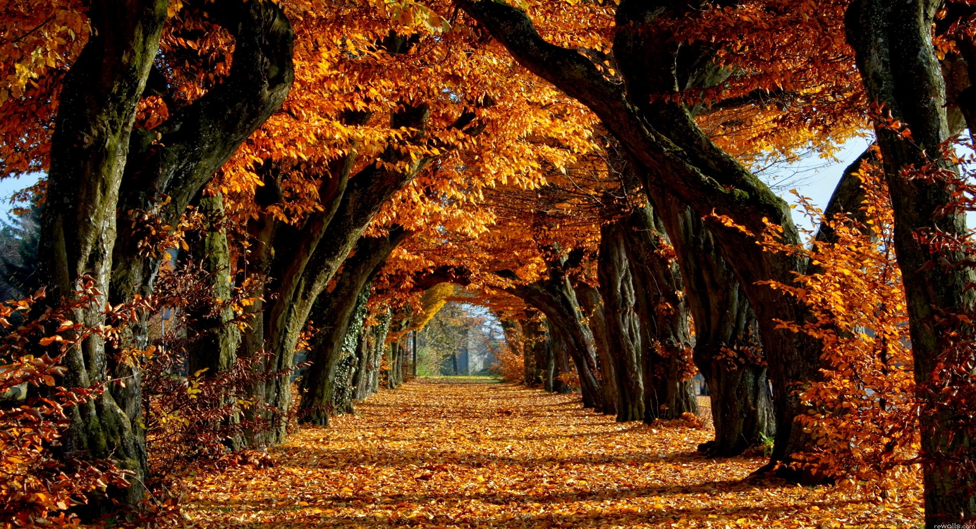 free-fall-backgrounds-autumn-trees-wallpaper-best-free-wallpaper ...