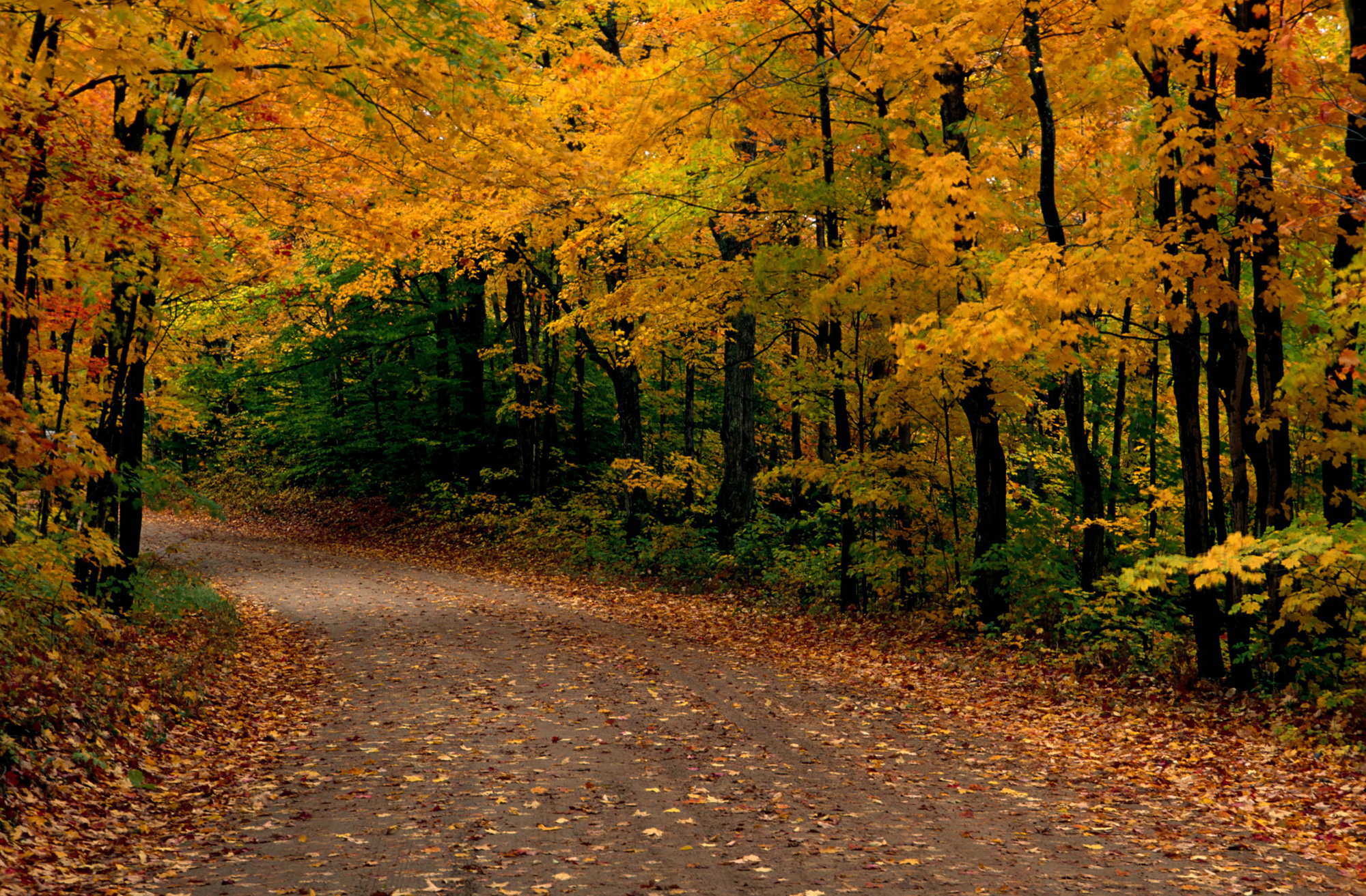 Fall Season Driving Safety Tips from Cooper Tire | AskPatty.com