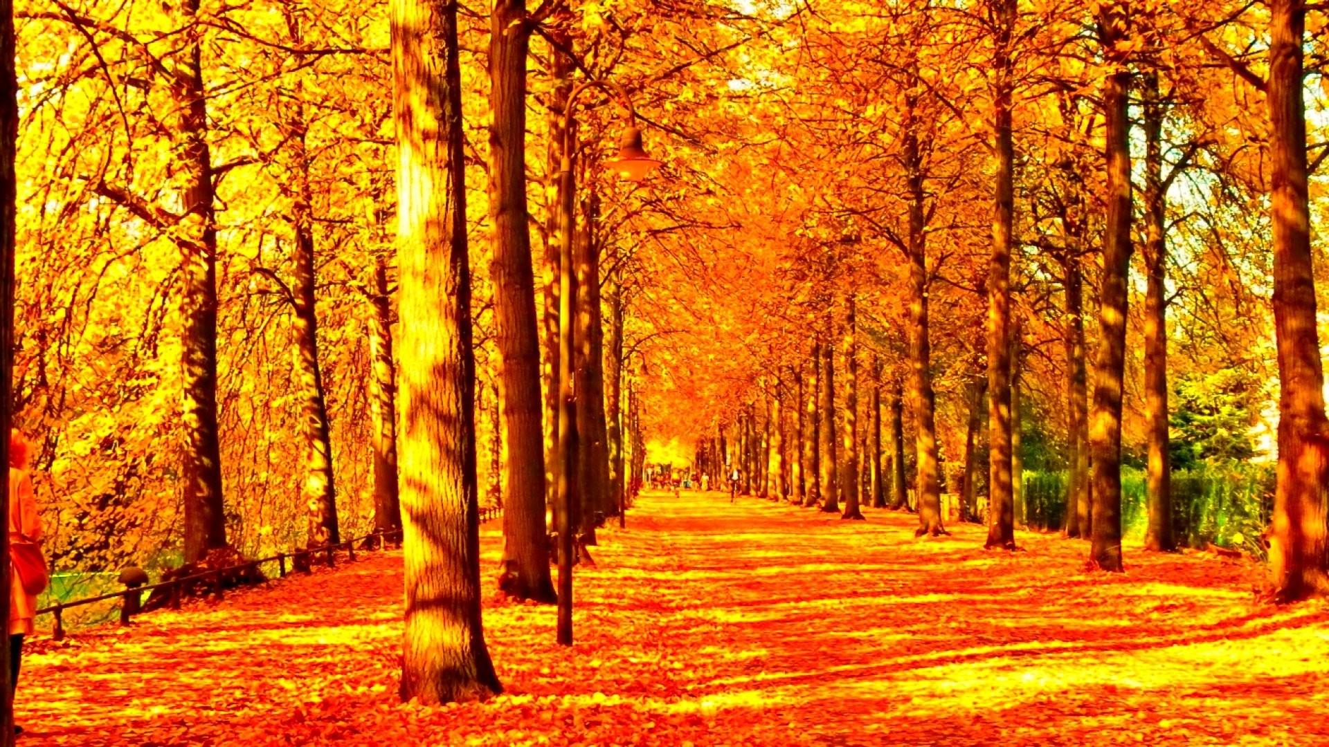 Leaves: Autumn Tree Landscape Leaf Fall Season Color Leaves Seasons ...