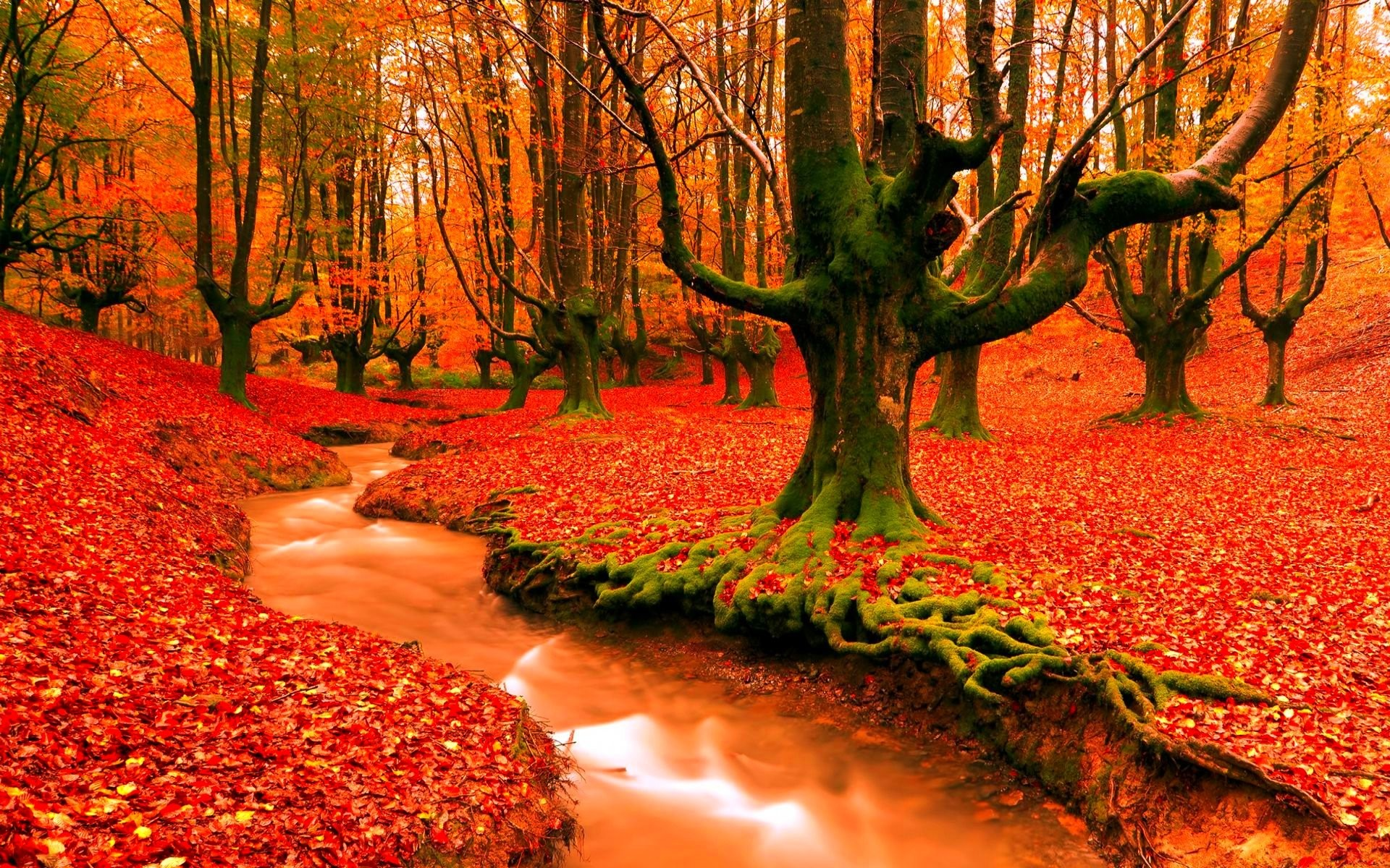 free photo fall season red season orange free download jooinn