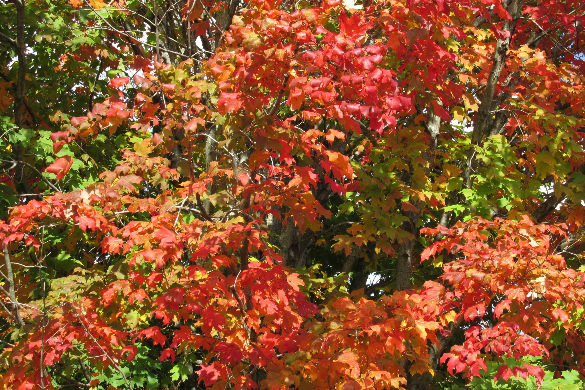 Florida gardeners can embrace the fall season - Orlando Sentinel