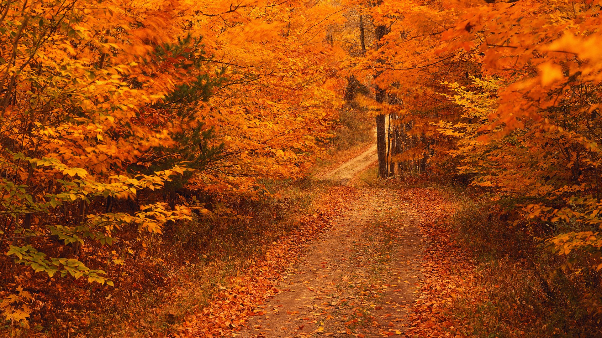 Restore-Renew-Revive in Autumn | Gaia Conceptions