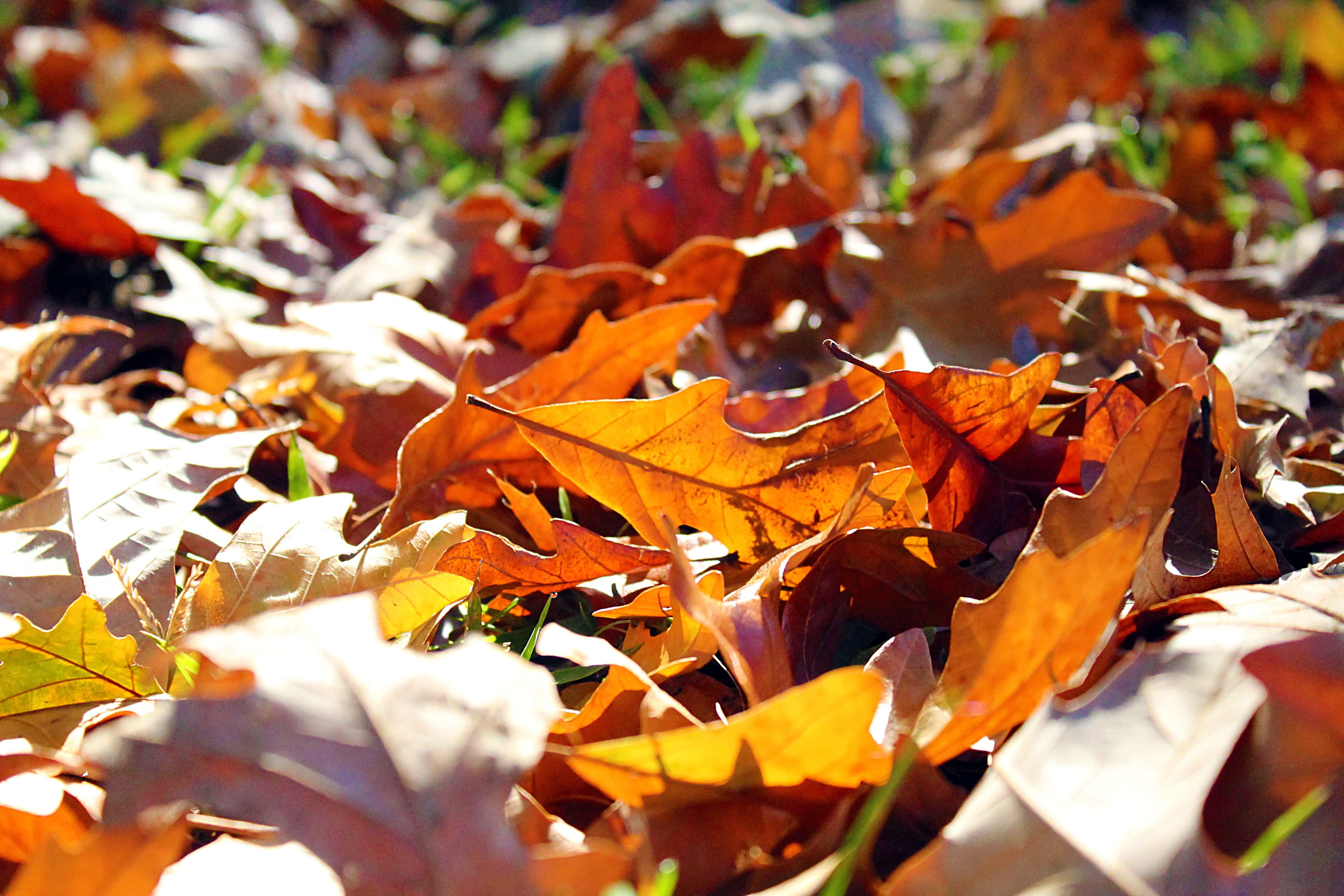 The Fall Season Approaches – NCS Student News