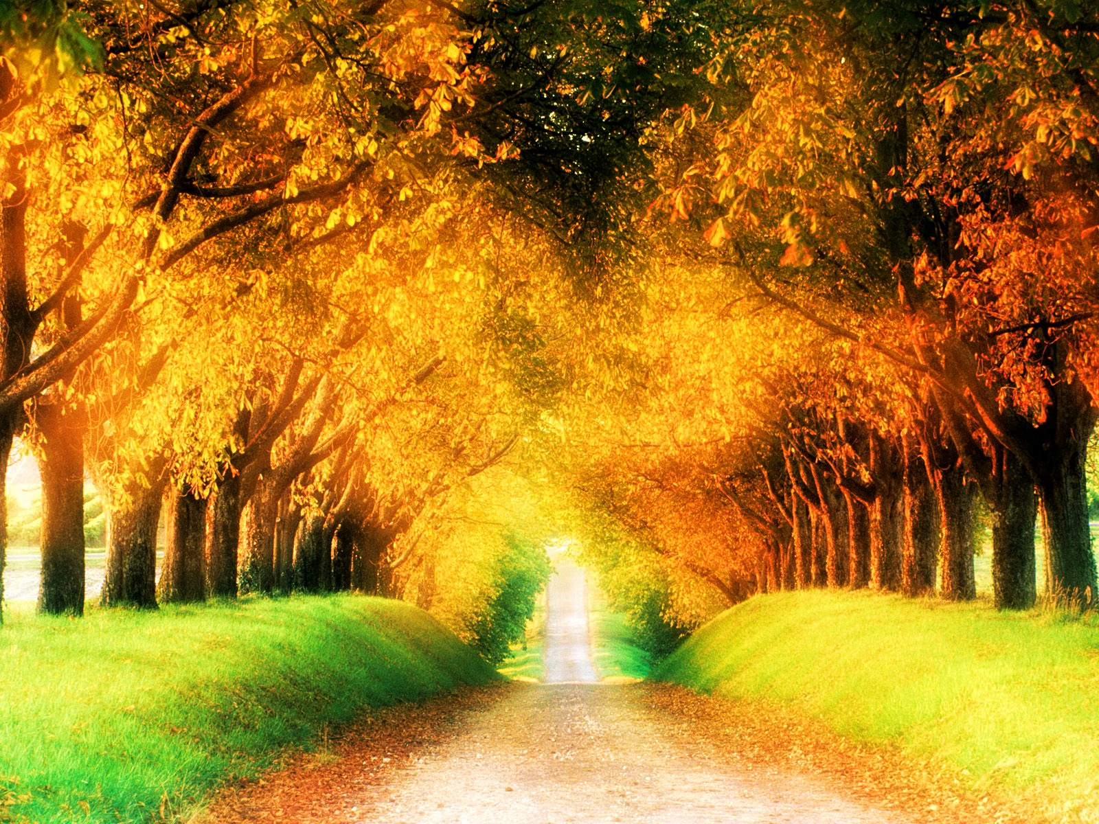 Fall Season Alley in the Forest widescreen wallpaper | Wide ...
