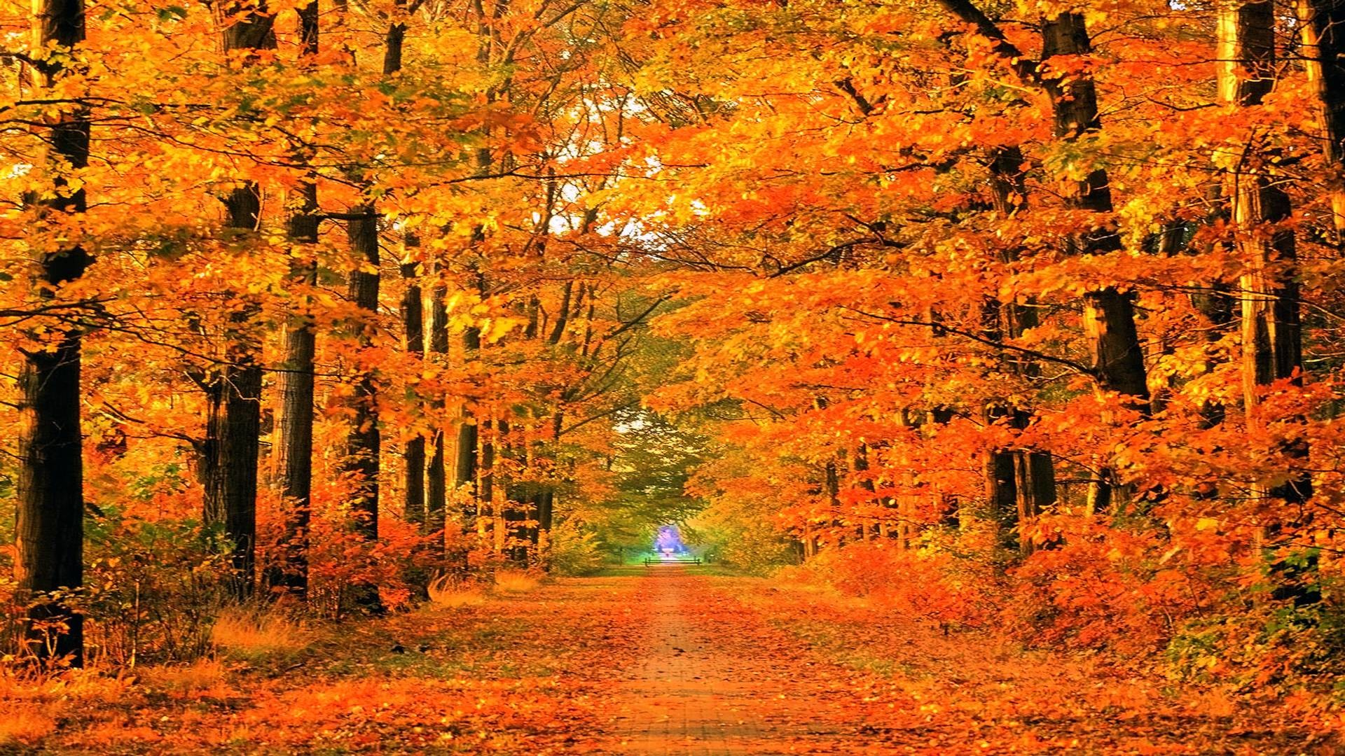 Nature & Landscape Autumn Fall Season wallpapers (Desktop, Phone ...