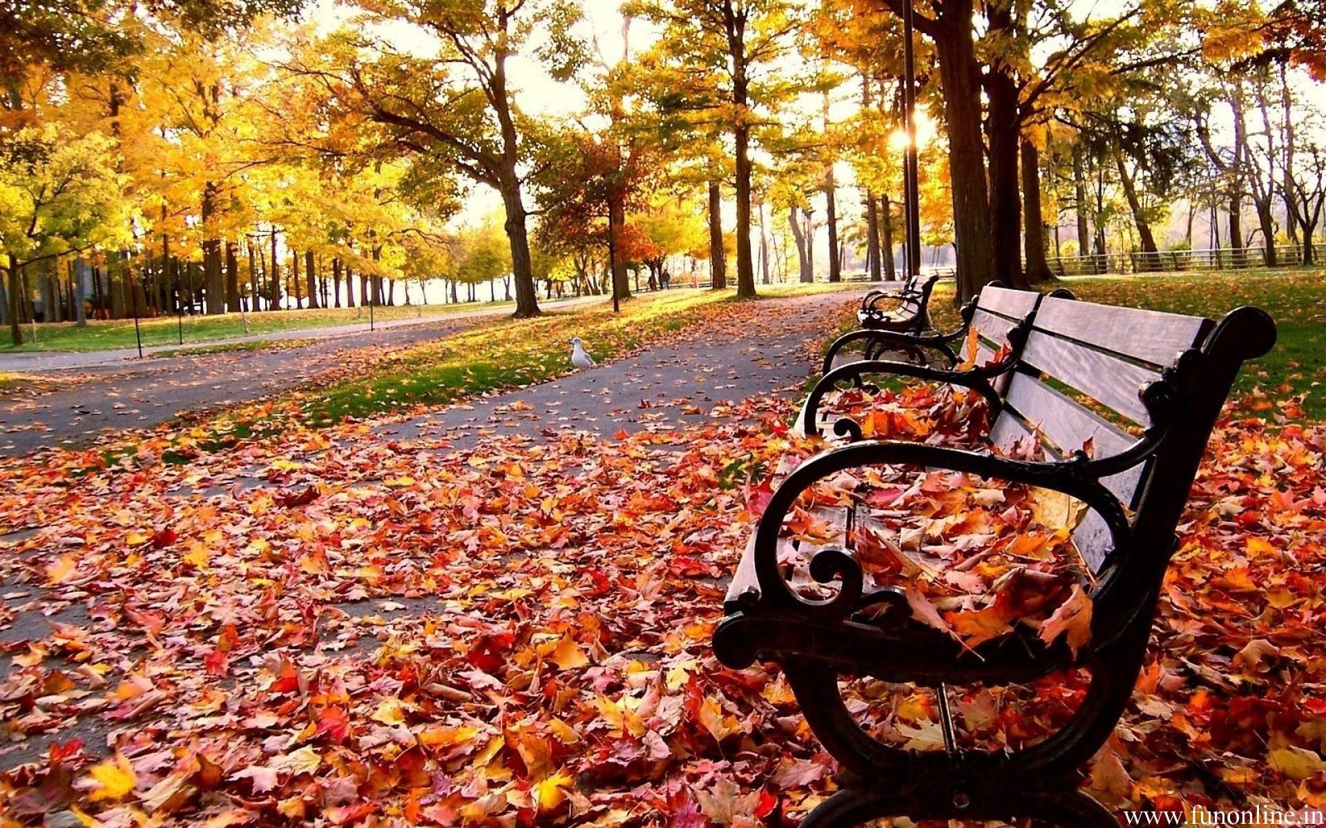 Wallpaper Fall Season (49+ images)