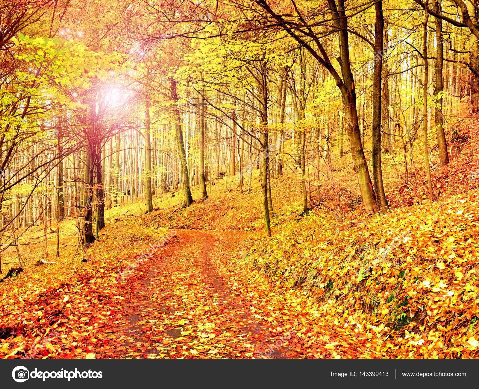 Fall season. Sun through trees on path in golden forest — Stock ...