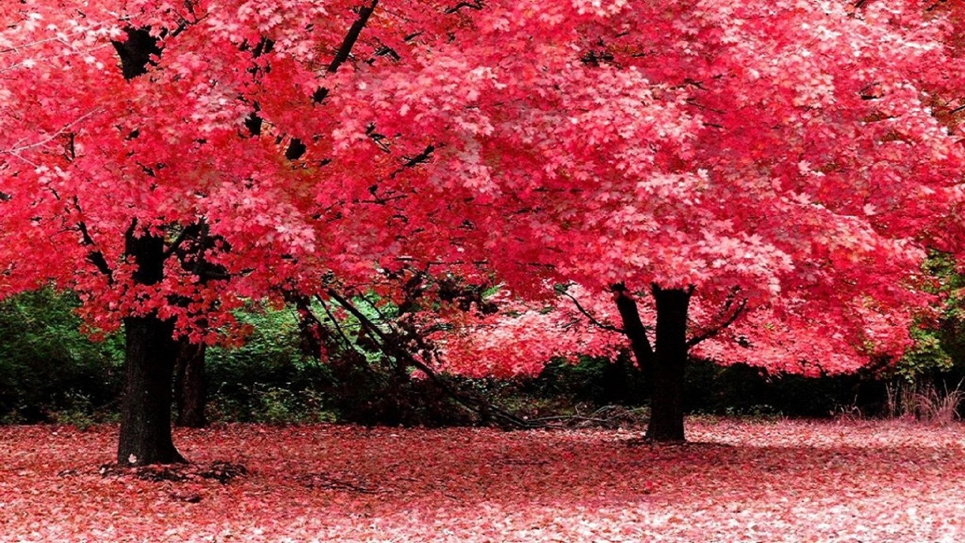 Autumn - HD Wallpaper