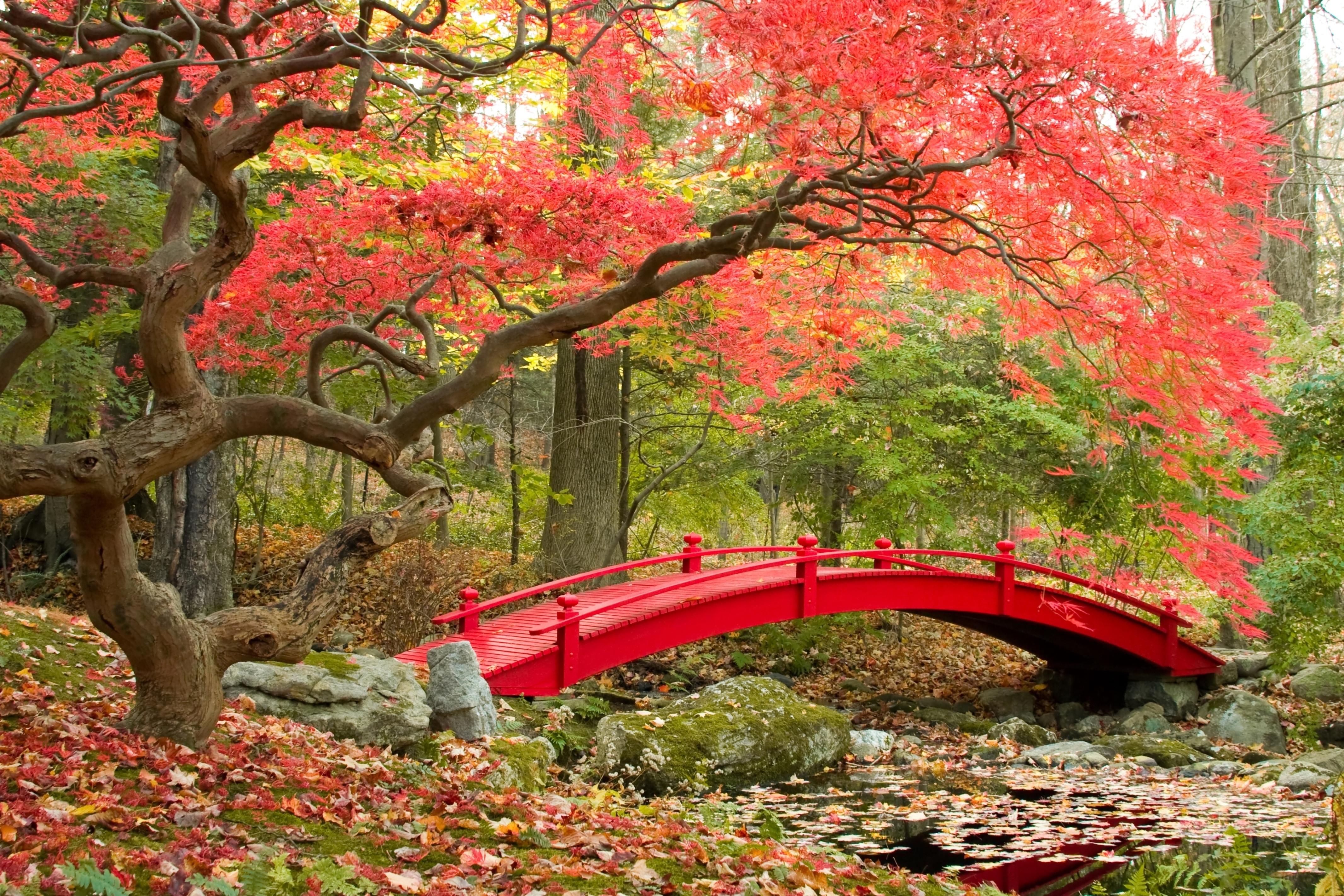 Wallpaper park, bridge, japanese garden, fall season, autumn » City ...