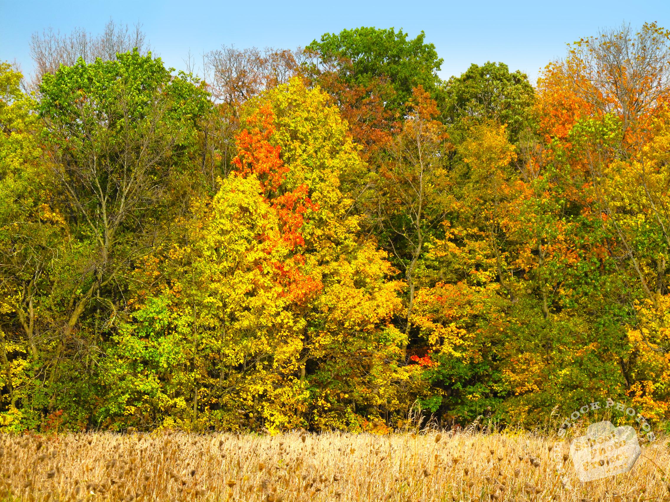 FREE Fall Foliage, Colorful Leaves Picture, Autumn Panorama Image ...