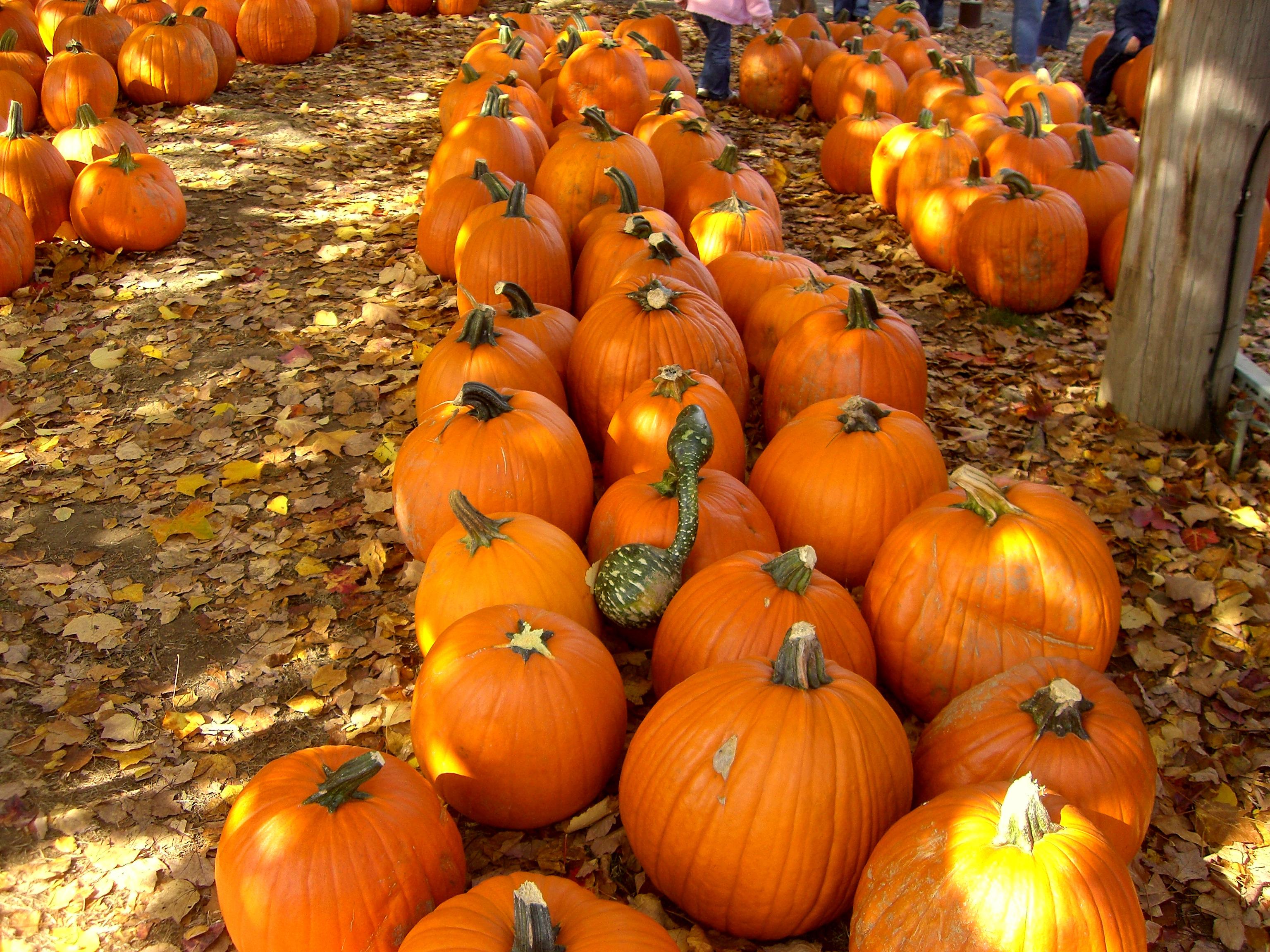 Fall! photo