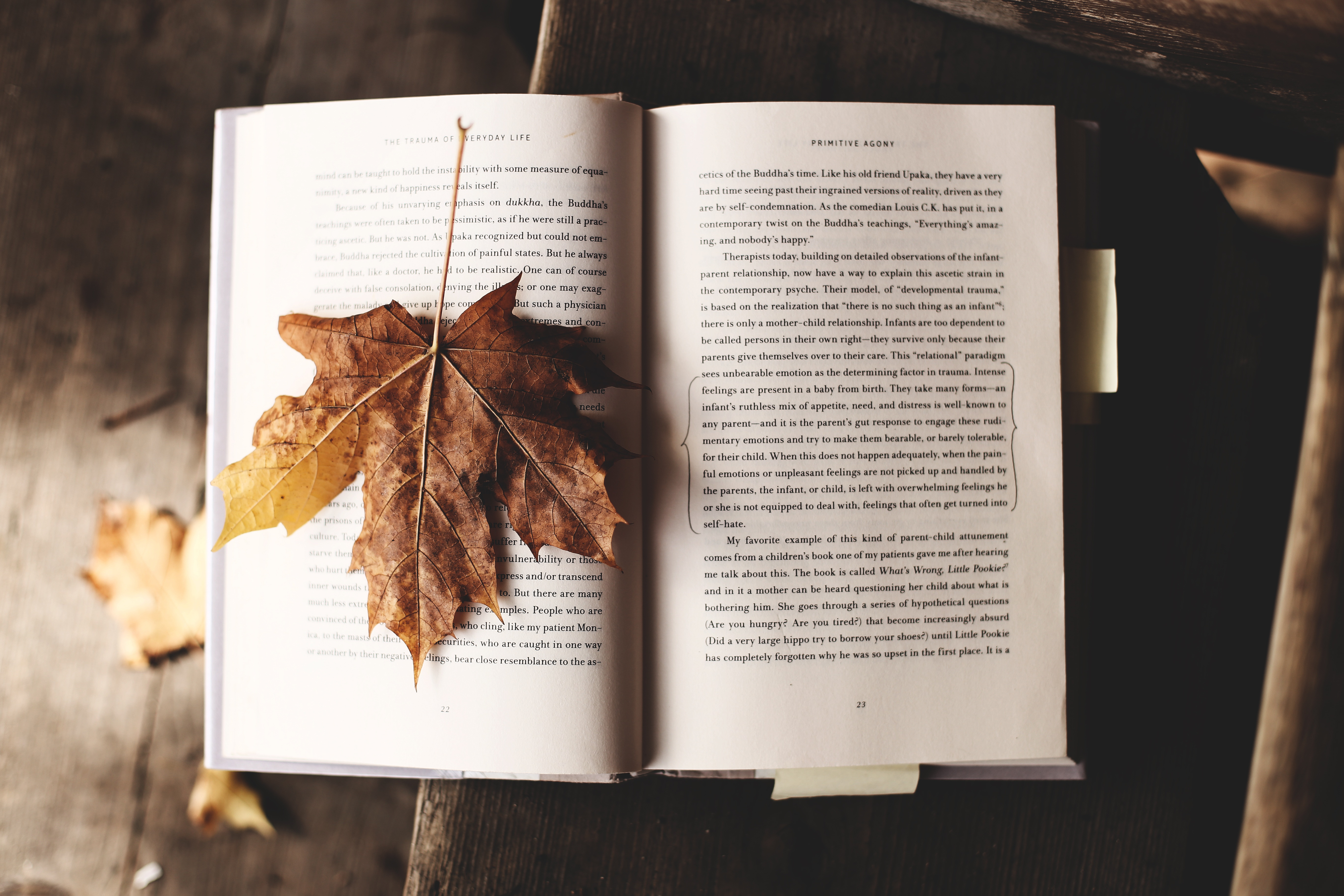 Fallen leave on the book photo
