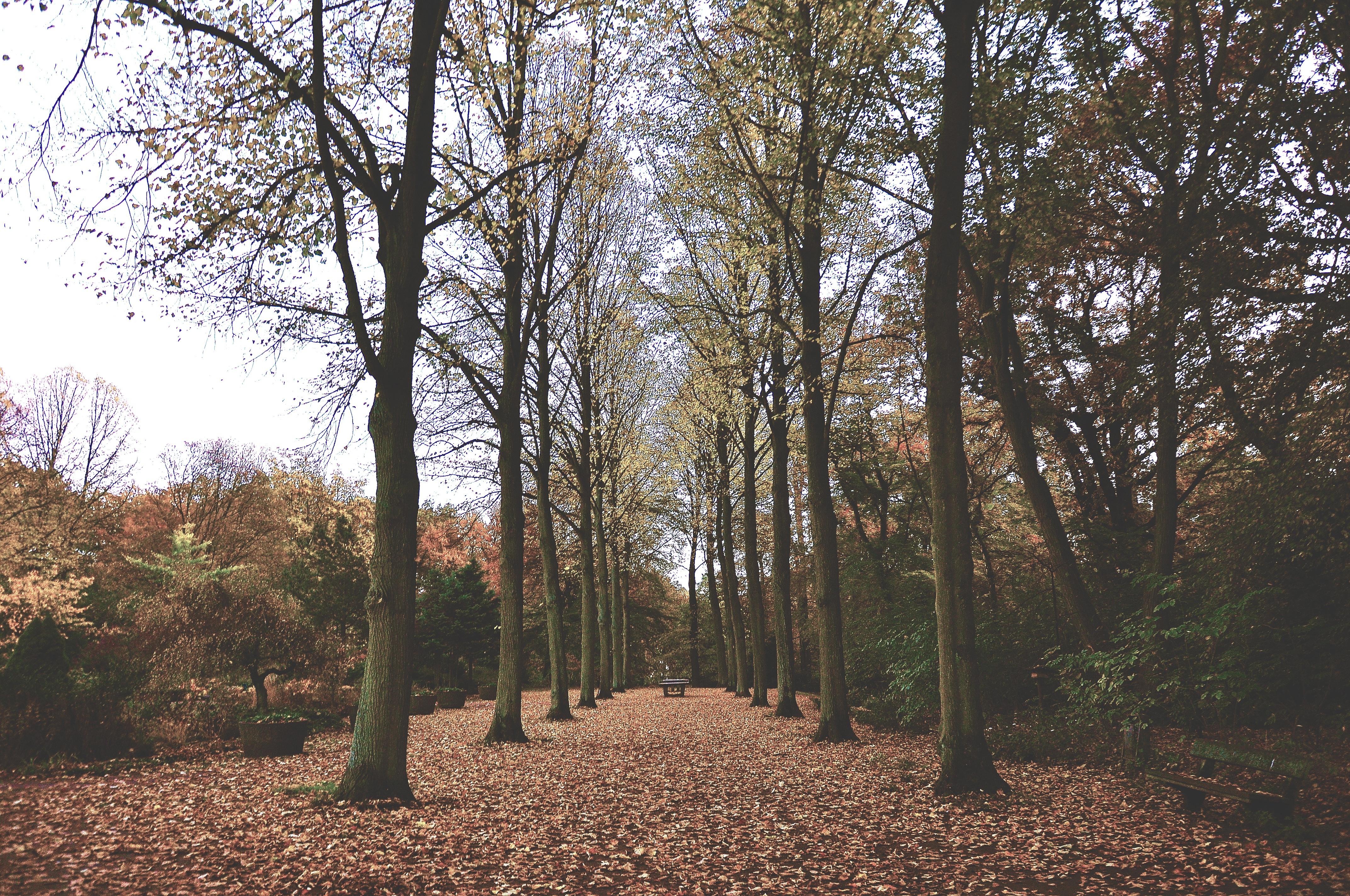 Fallen Leaves, Nature, Season, Leave, Leaf, HQ Photo