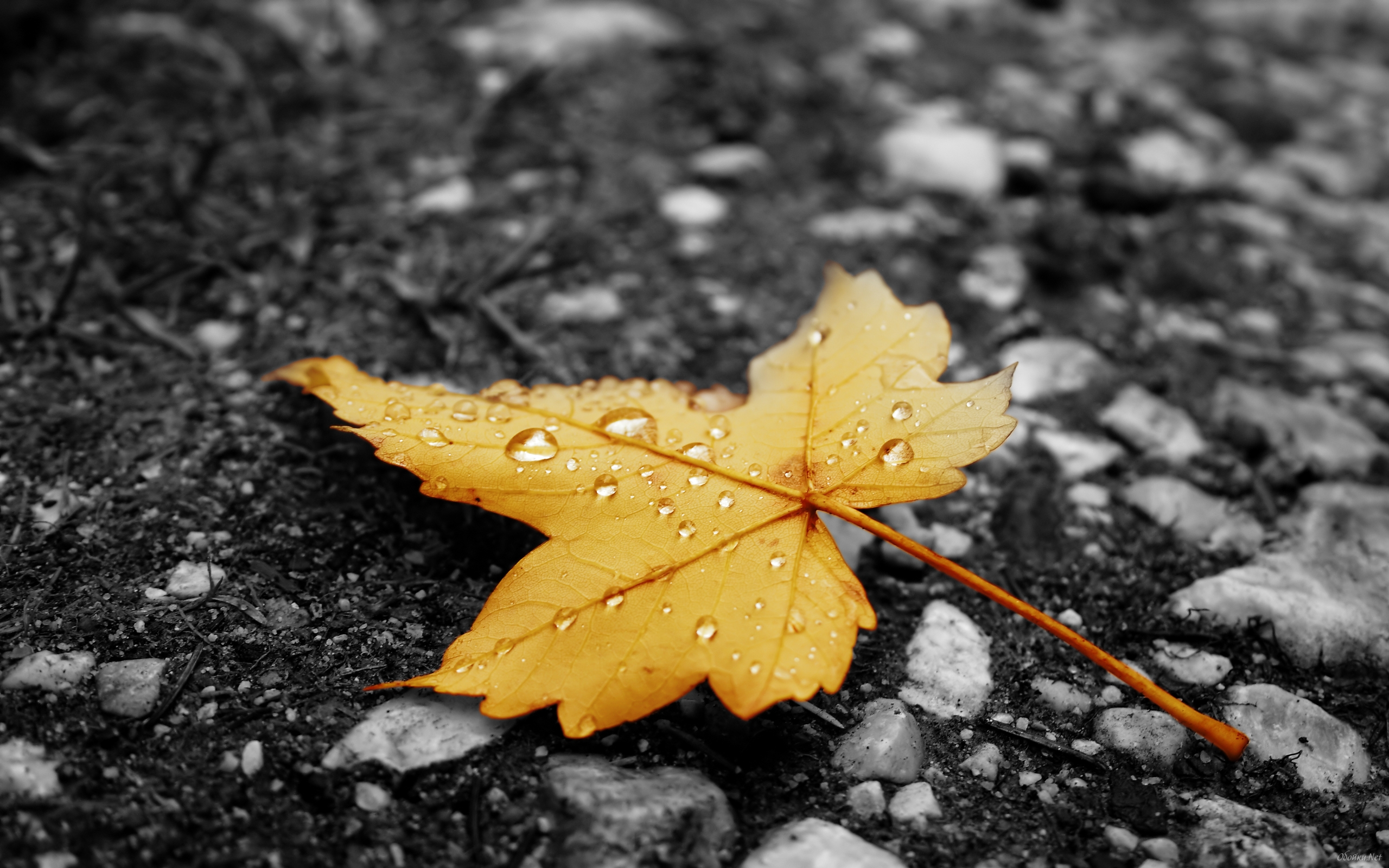 Fallen leaves on asphalt wallpapers   HD Desktop Wallpaper