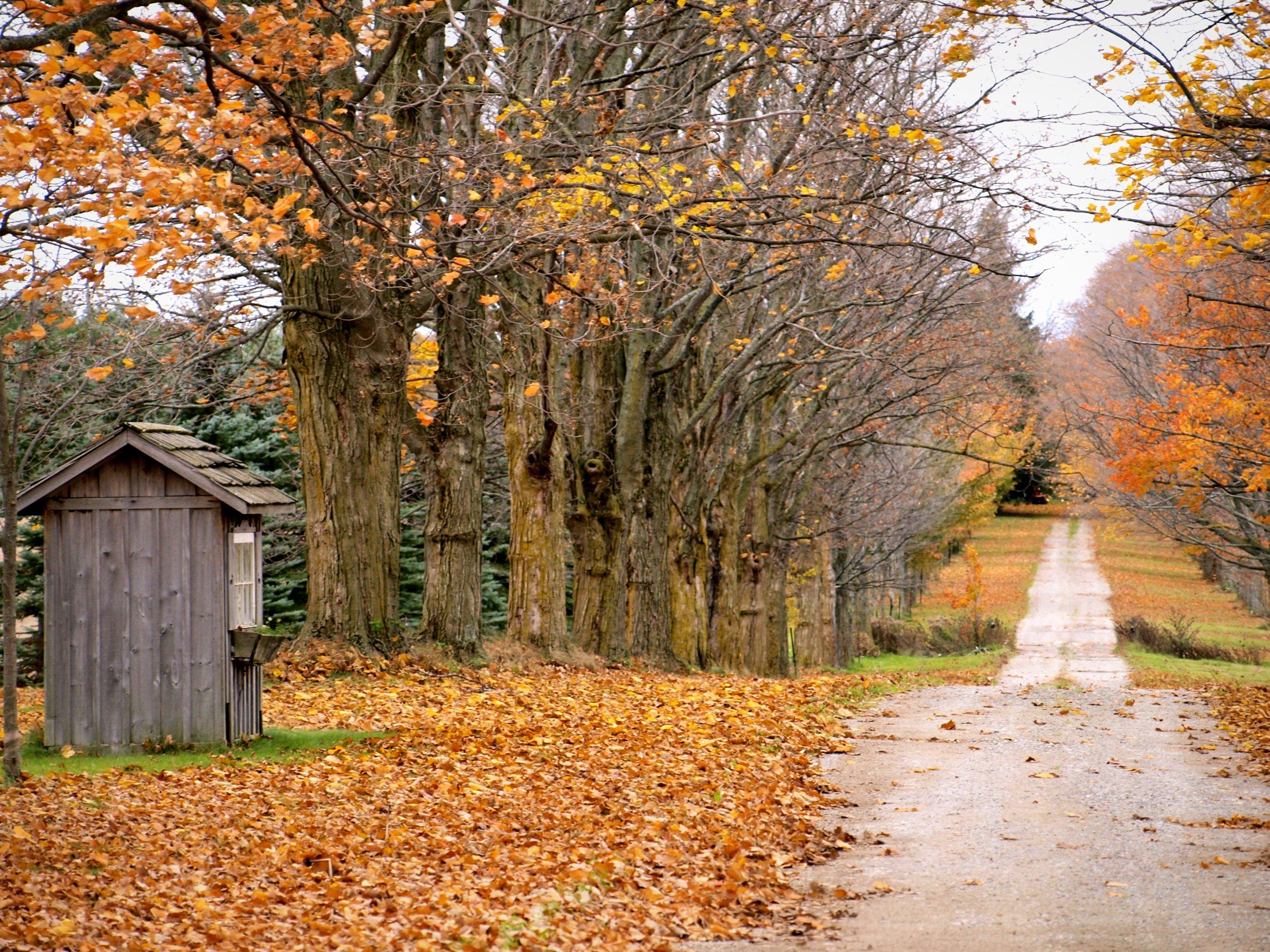 File:Fallen Leaves October 2011.jpg - Wikimedia Commons