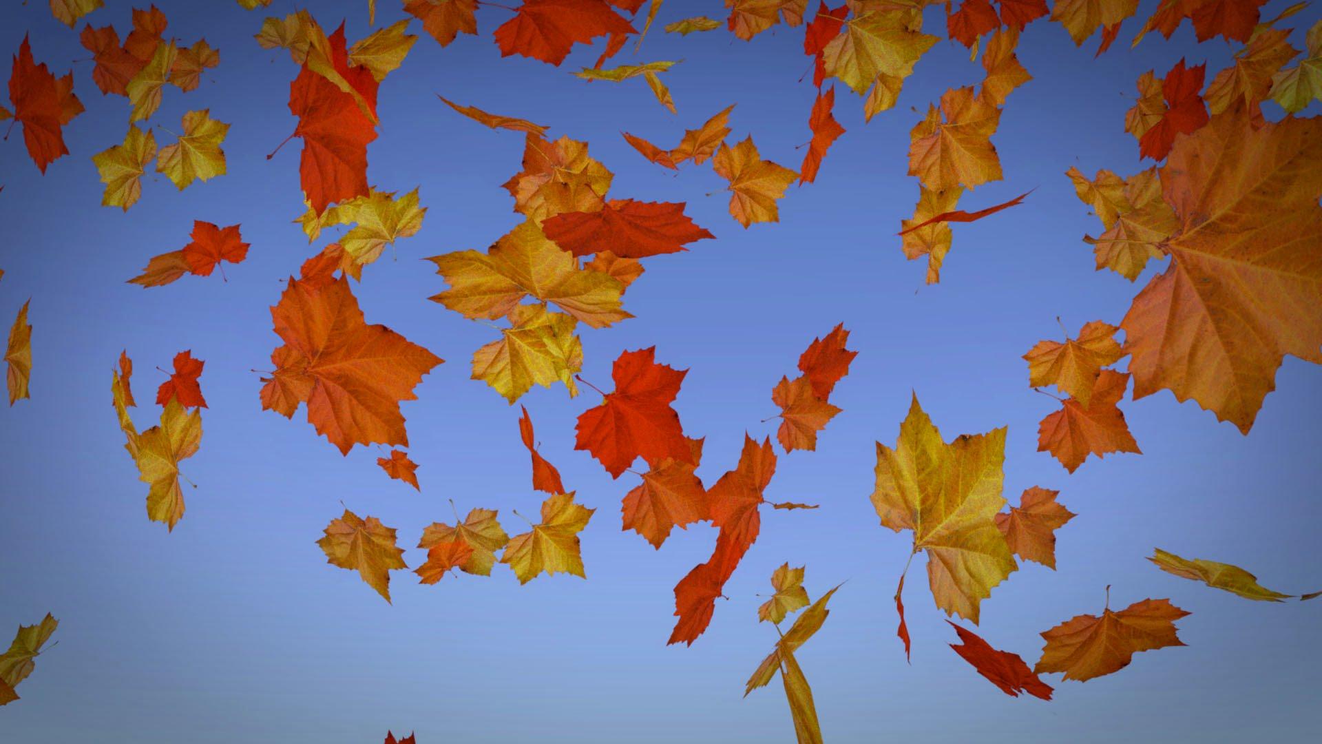 Blender 2.72 Tutorial - Falling Leaves - YouTube