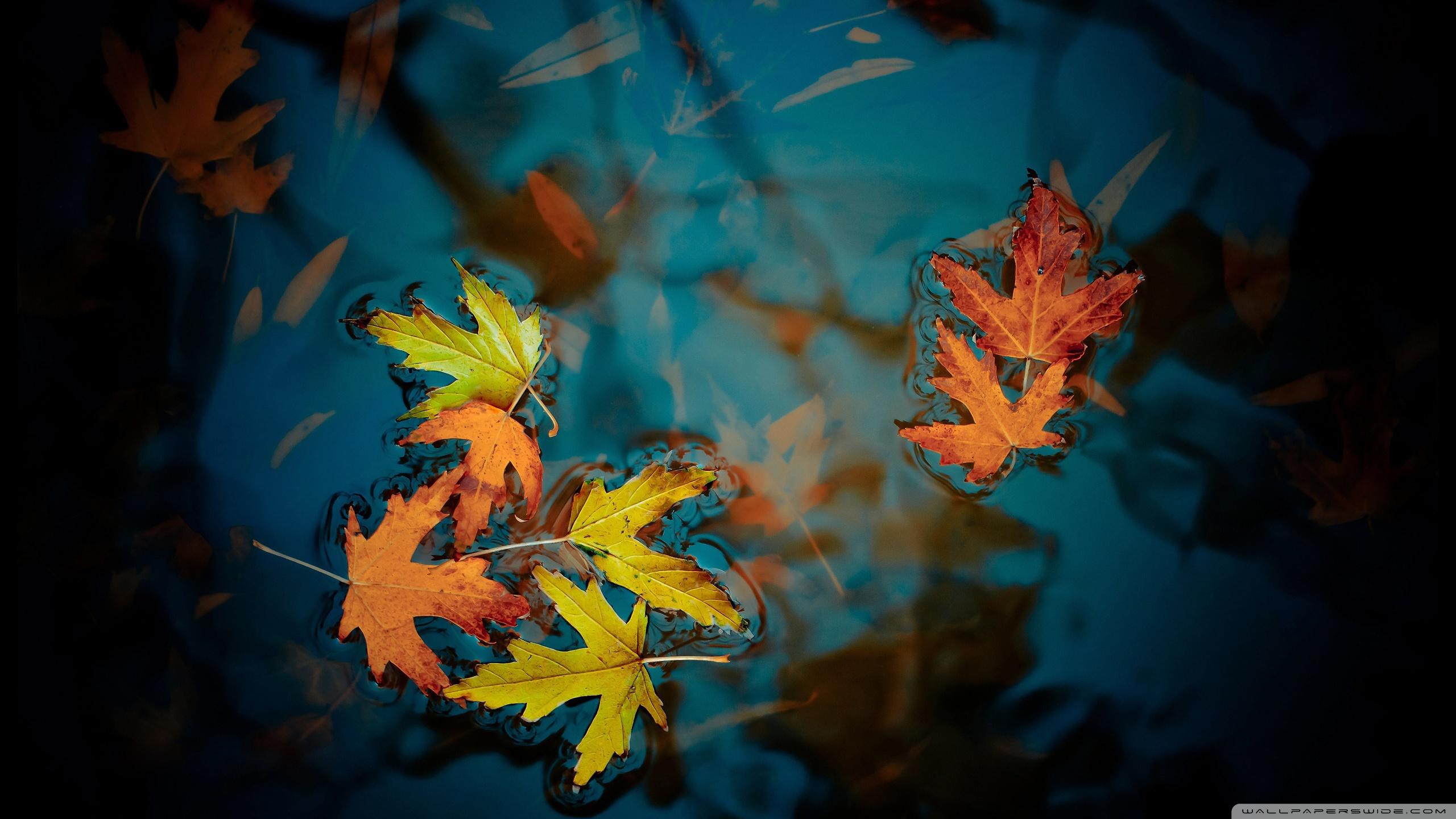 Fallen Leaves ❤ 4K HD Desktop Wallpaper for 4K Ultra HD TV • Dual ...
