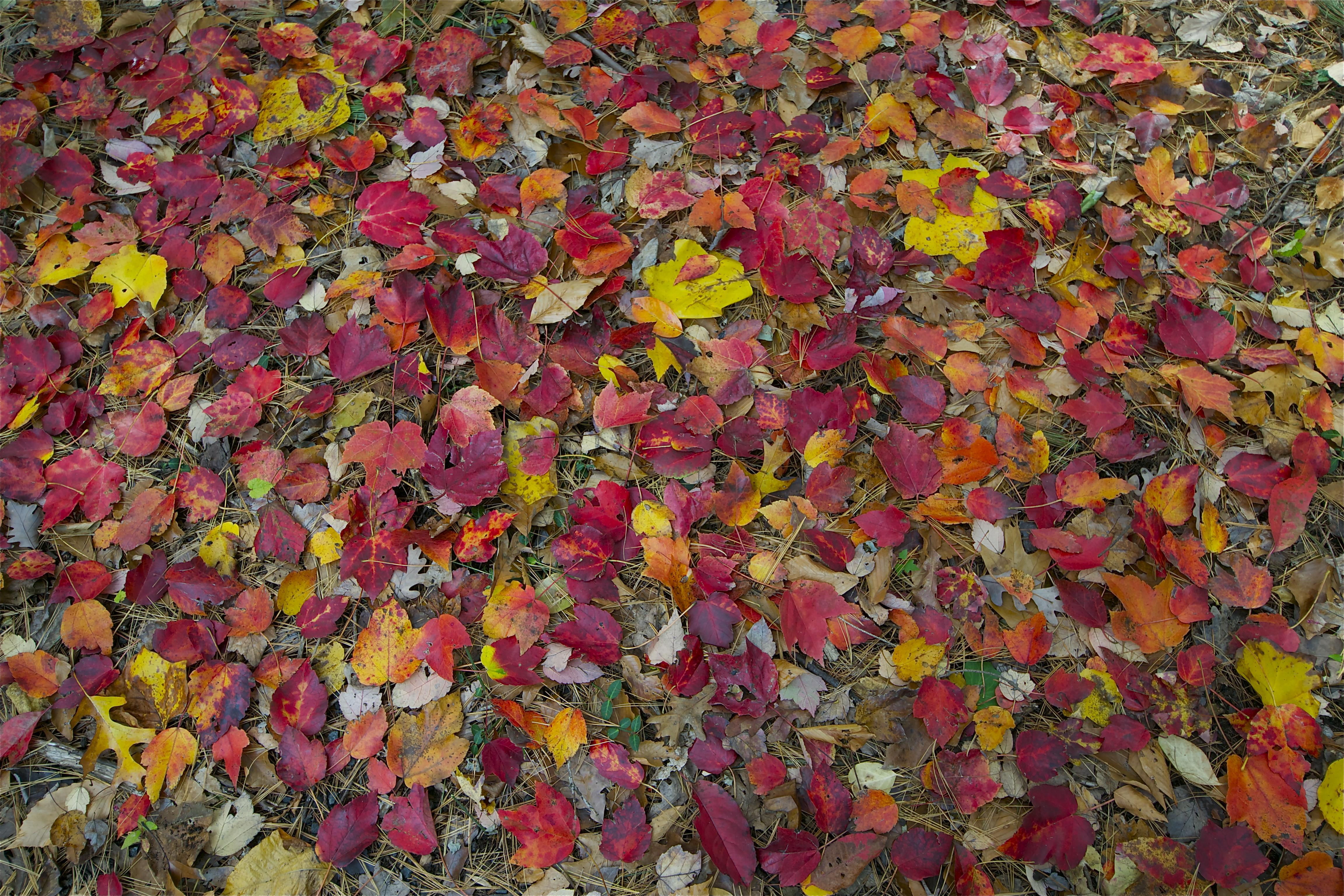 fallen leaves | Pops & Mojo Photos