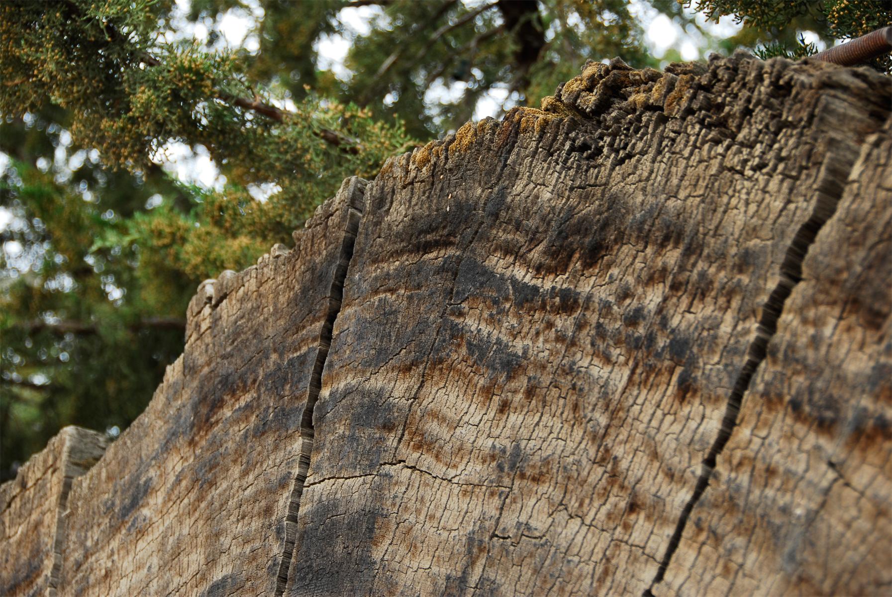 Fallen Tree - Cross Section, Bark, Bspo06, Fallen, Green, HQ Photo