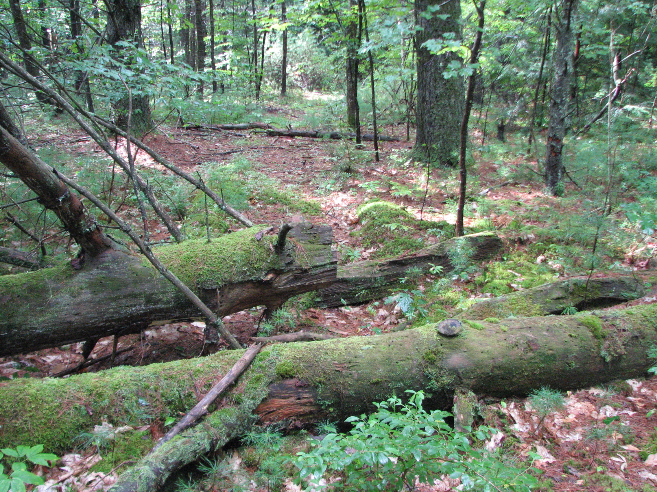 Fallen Trees with Moss, Trees, Woods, Moss, Forest, HQ Photo
