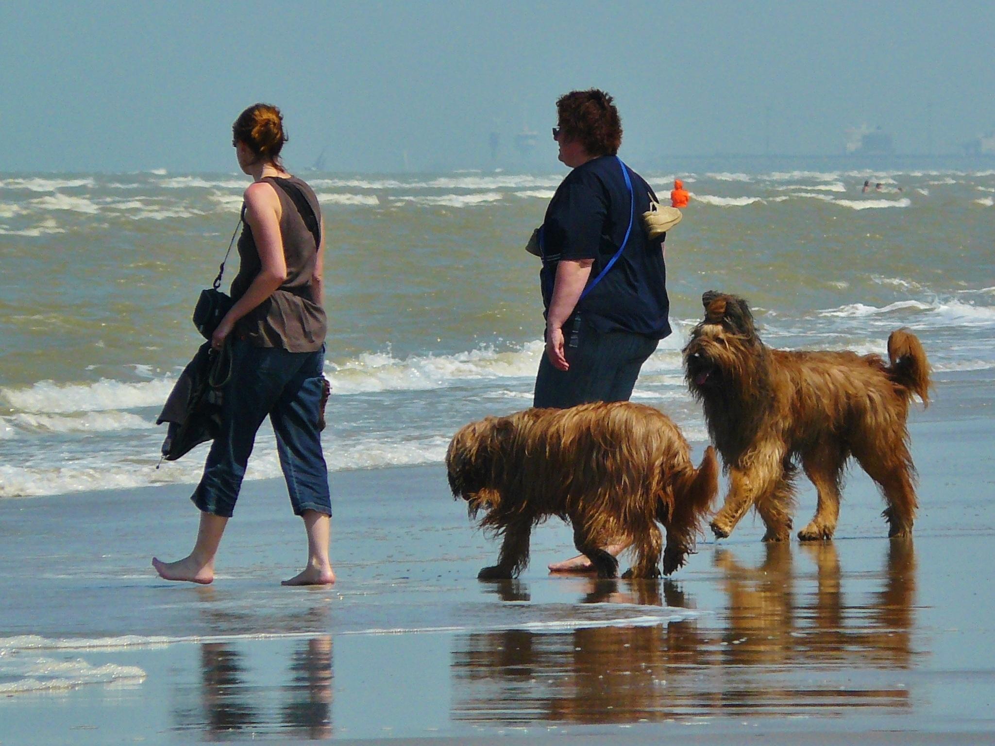 Family Members, Animal, Beach, Dog, Family, HQ Photo