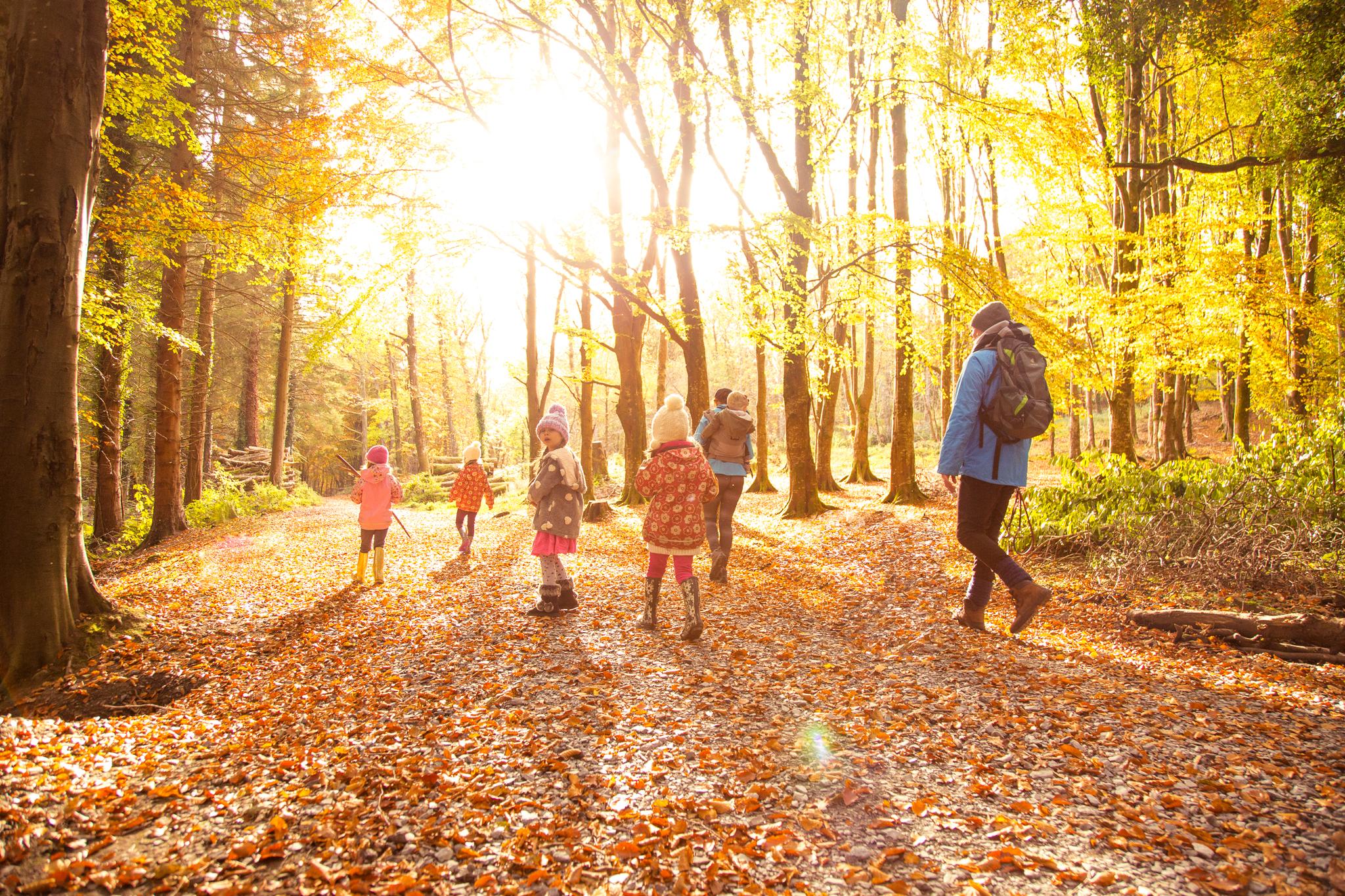 Discover Family Walks - Massy's Estate, Killakee - Families Go ...