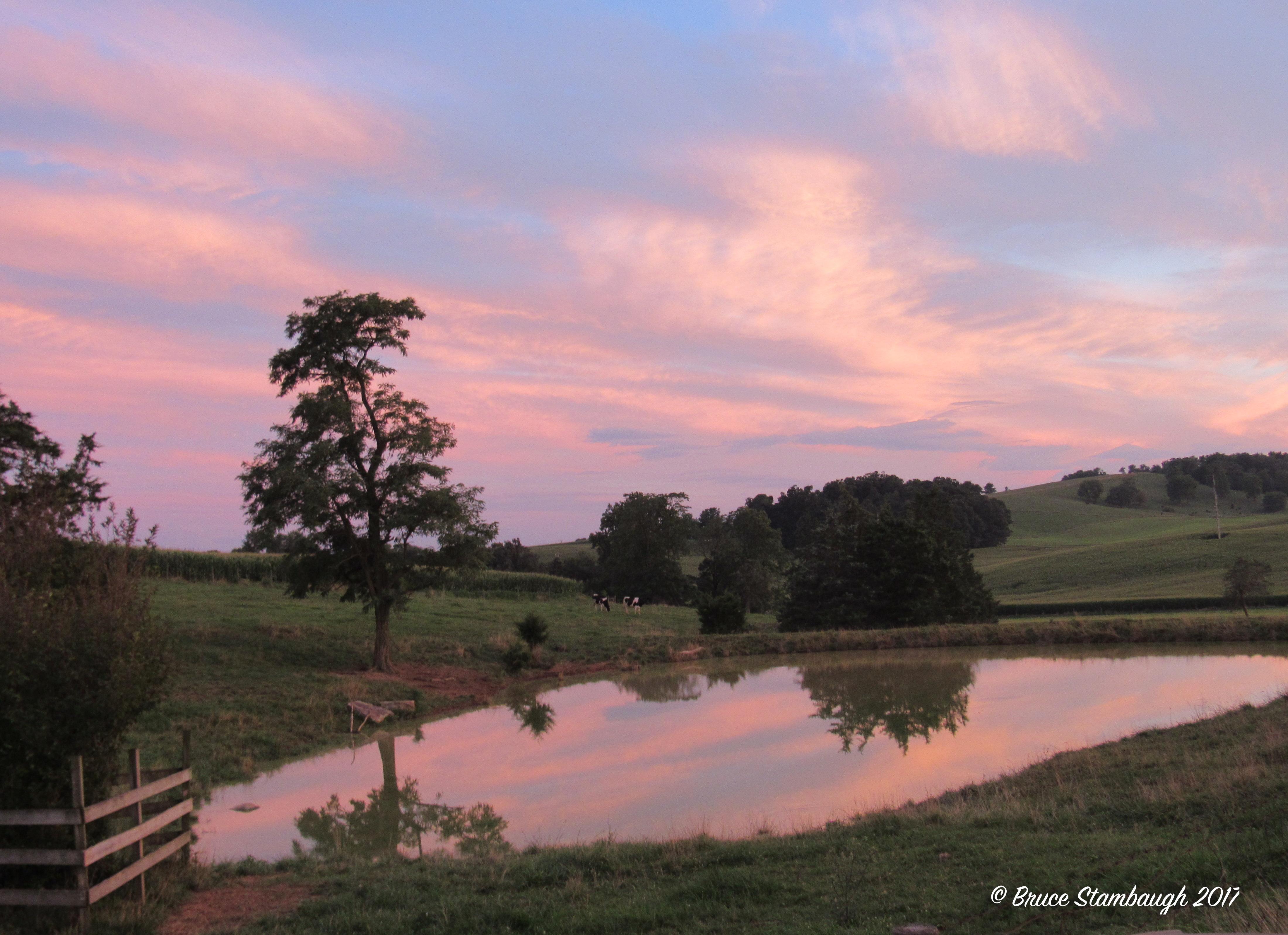 Reflections on a Farm Pond | Roadkill Crossing