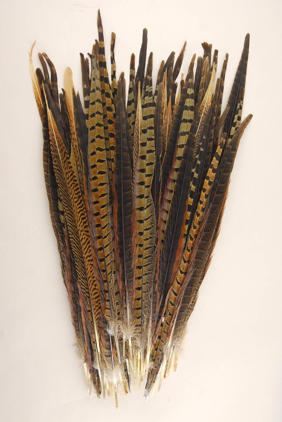Feather photo