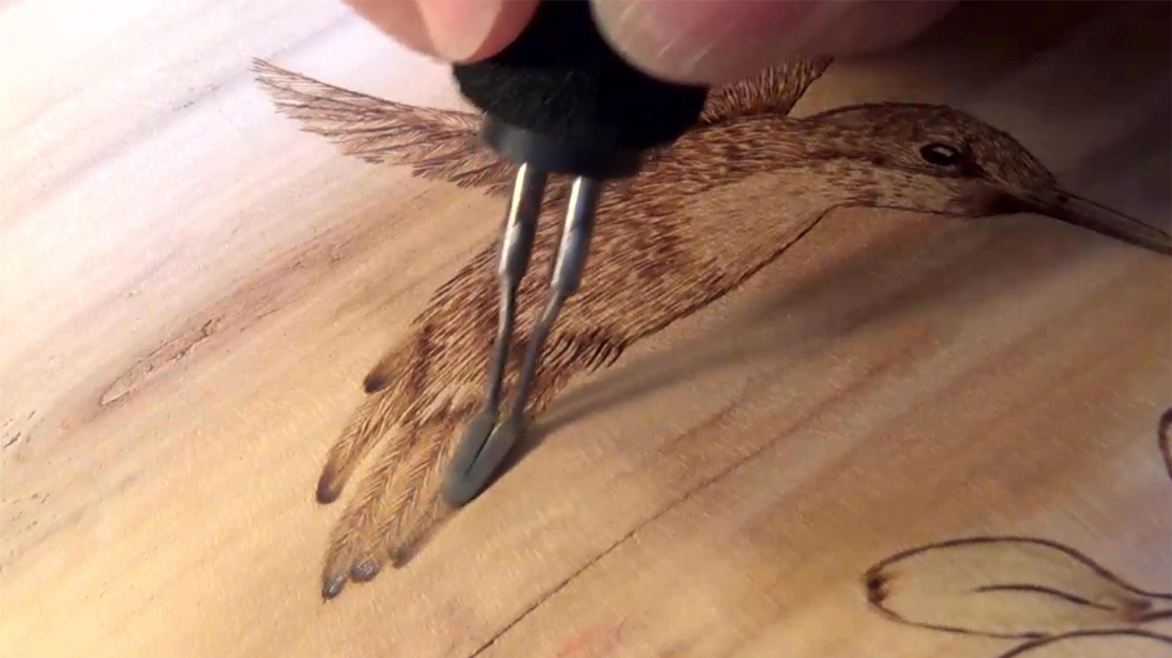 Burning Hummingbird Feathers - Burning With Sharon