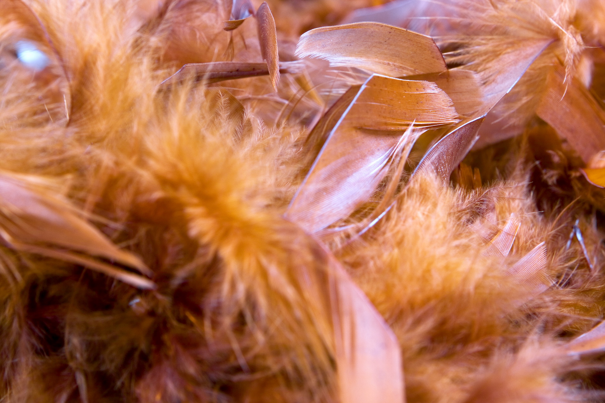 feather boa, Silky, Soft, Texture, Wallpaper, HQ Photo