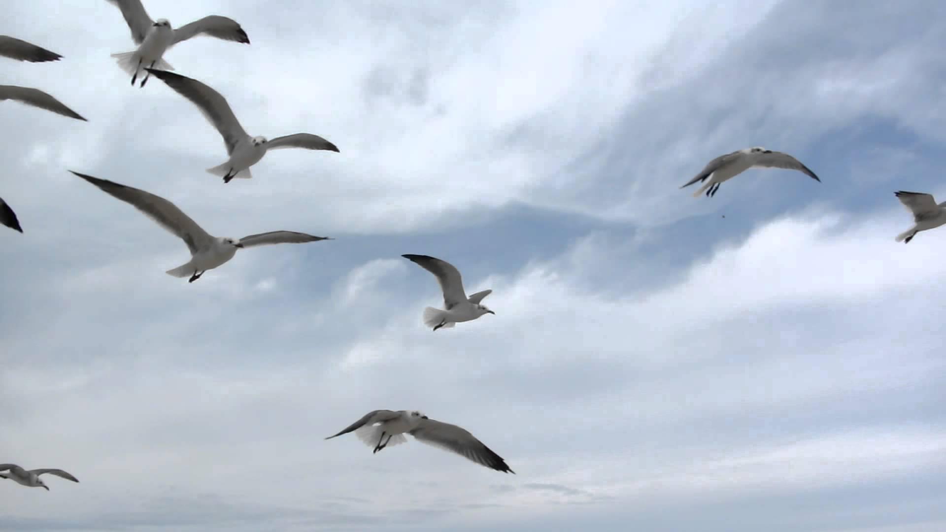 Feeding Seagulls in Corpus Christi - YouTube
