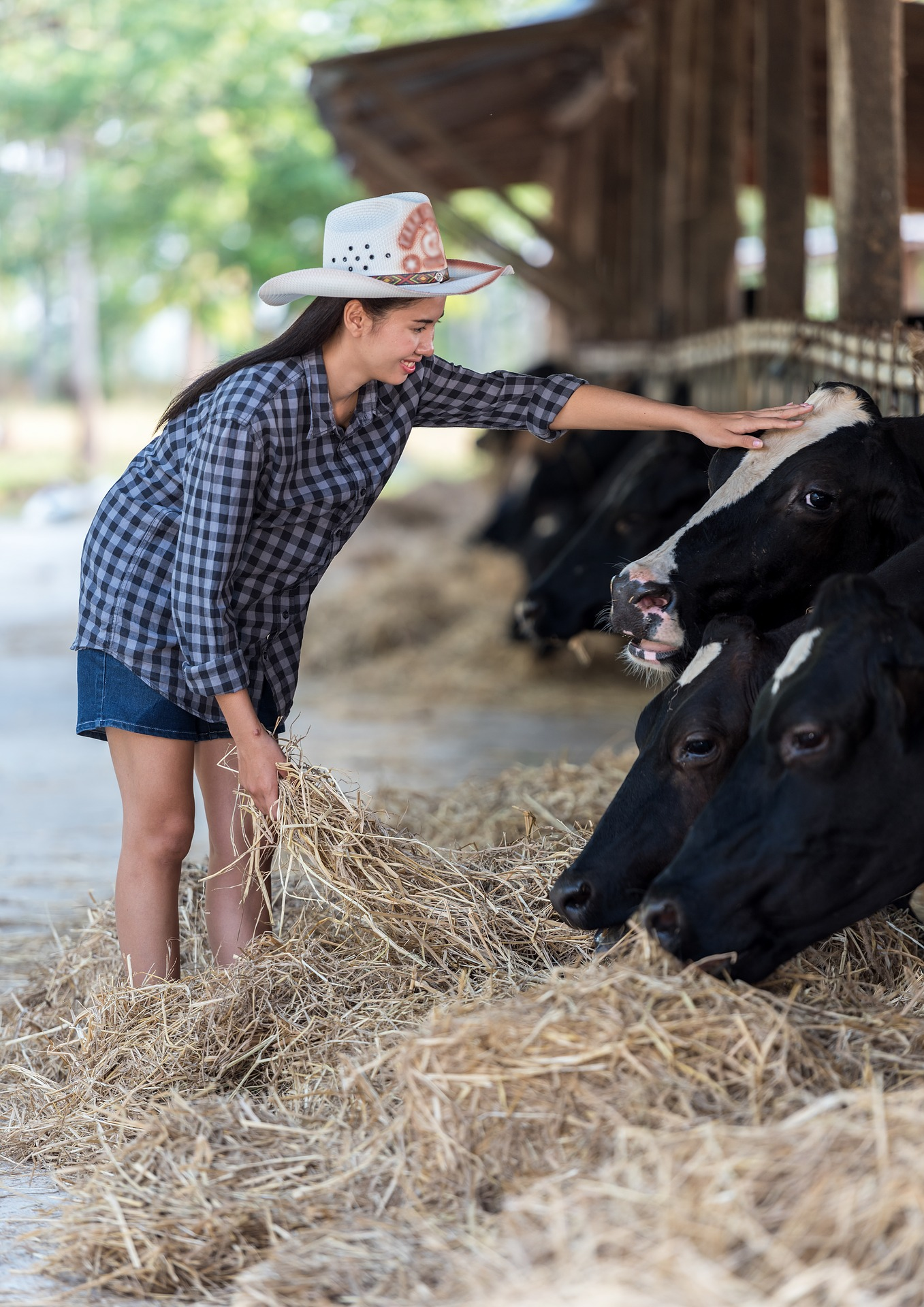 Feeding Animals, Animal, Cow, Farm, Girl, HQ Photo