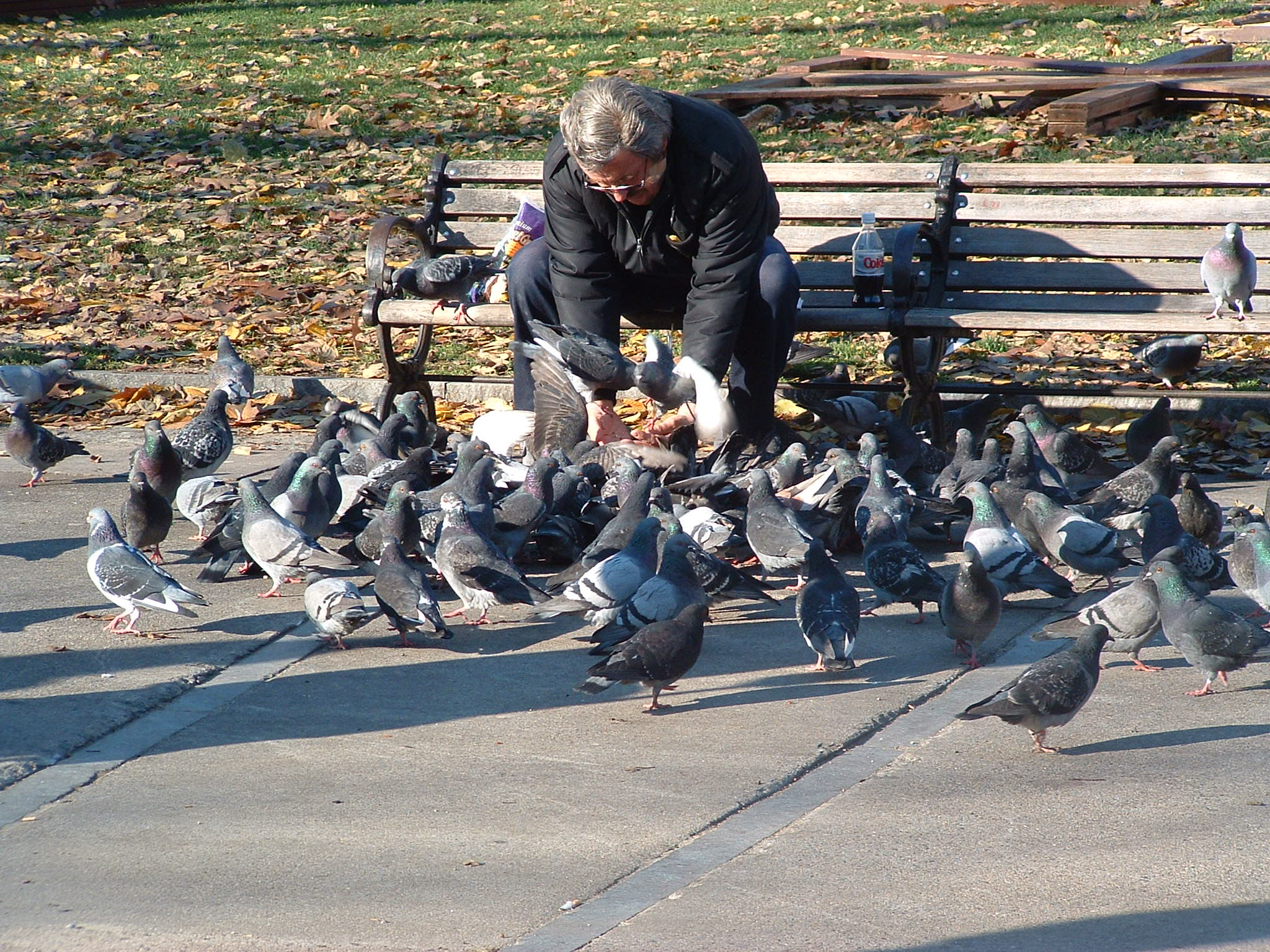 File:Man feeding pigeons.jpg - Wikimedia Commons