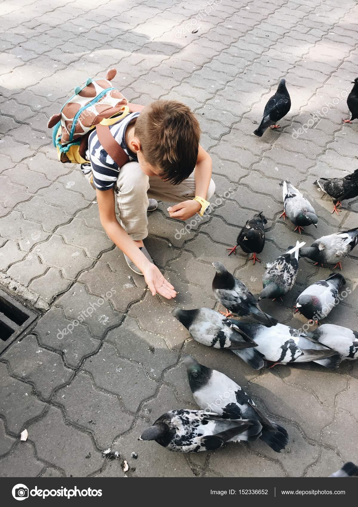 boy feeding the pigeons — Stock Photo © Alekuwka #152336652