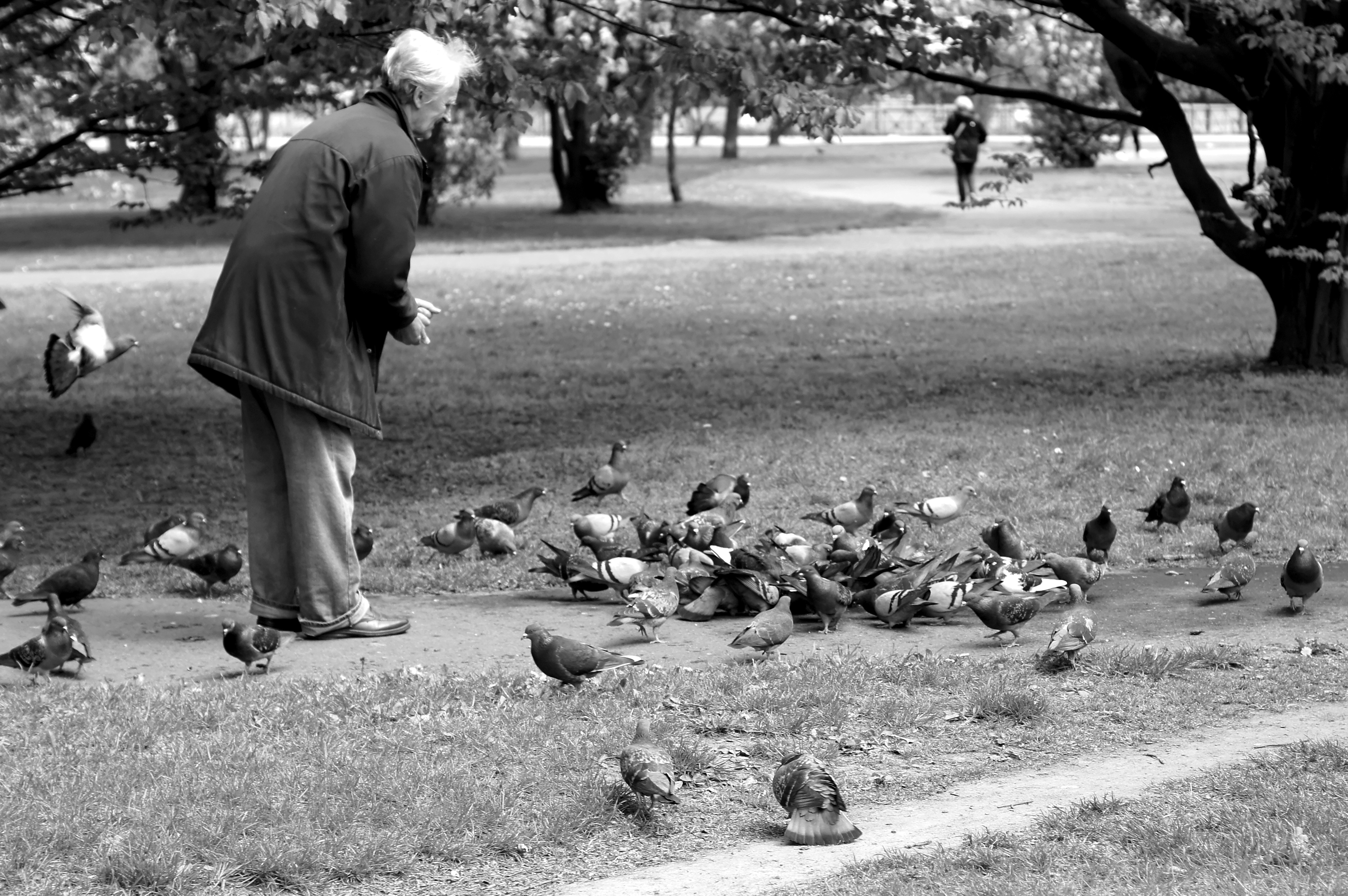 Old man feeding pigeons in the park - Our Great Photos