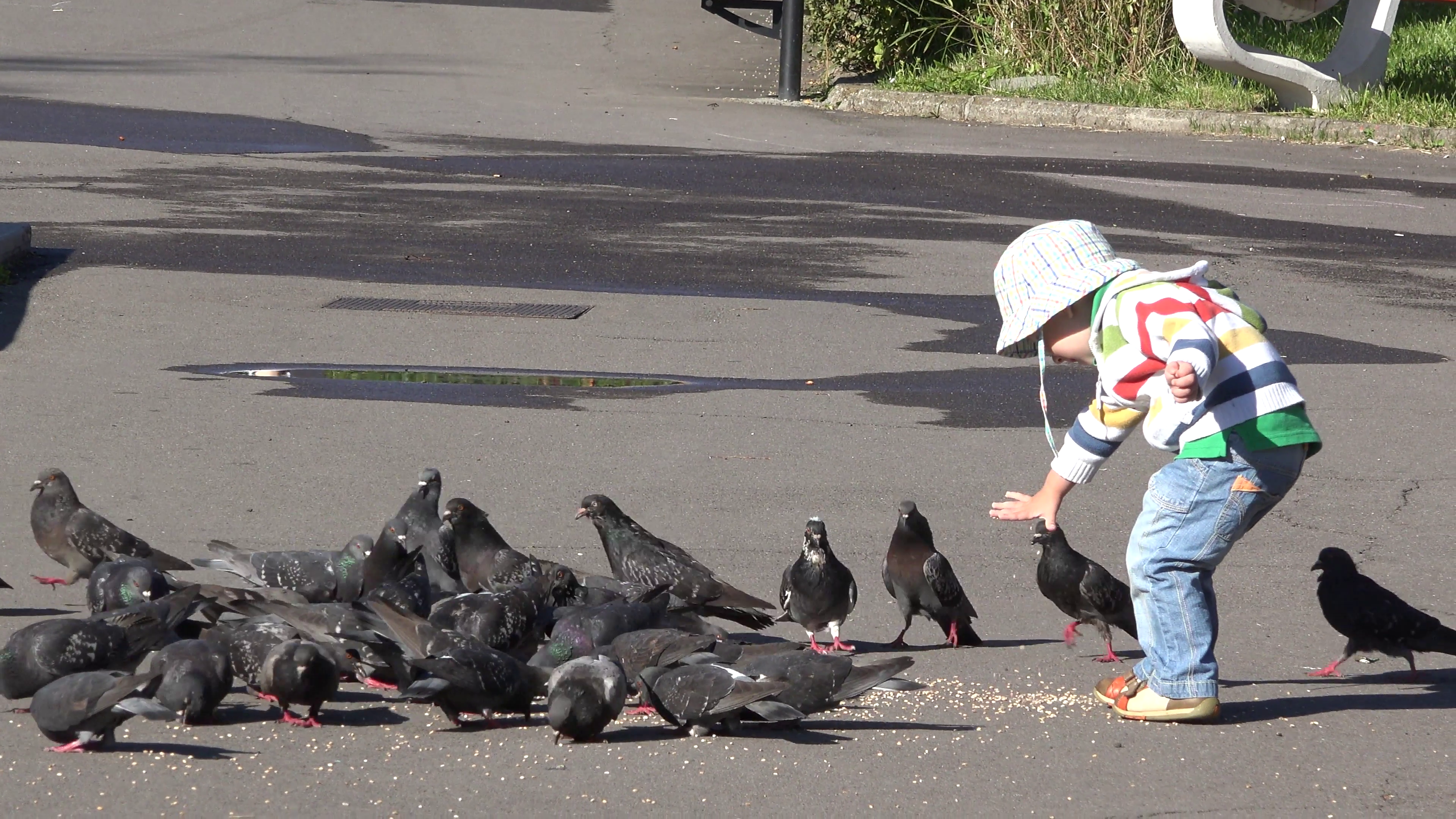 Little child feeding pigeons. Boy running, bird flying 4k Stock ...