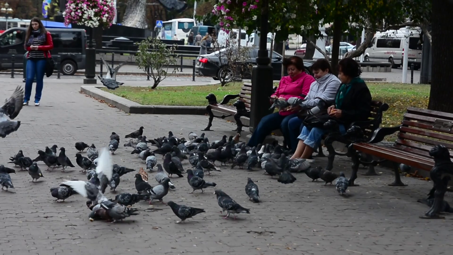 Feeding the pigeons photo