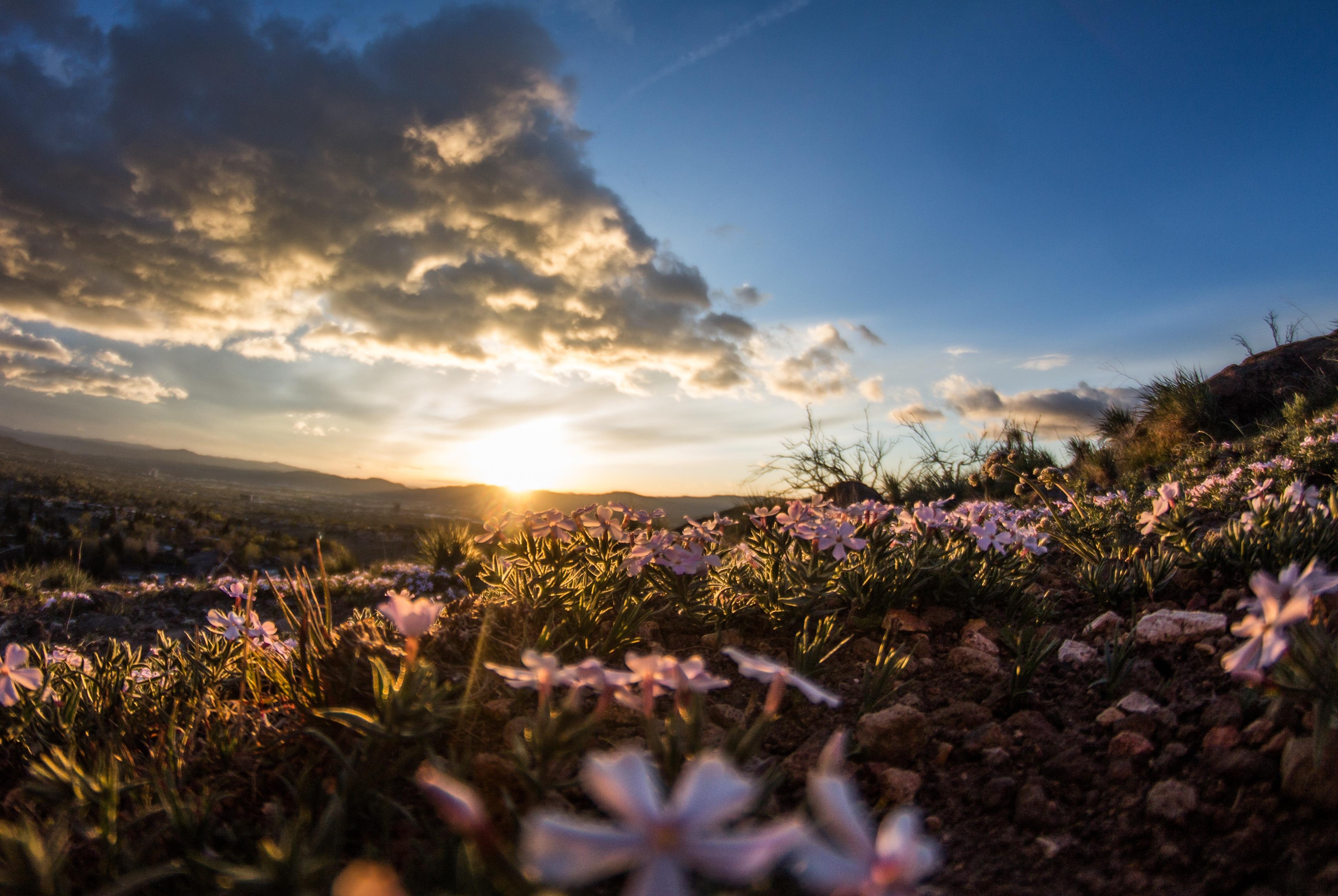 Feeling of joy, Beautiful, Beauty, Flower, Garden, HQ Photo