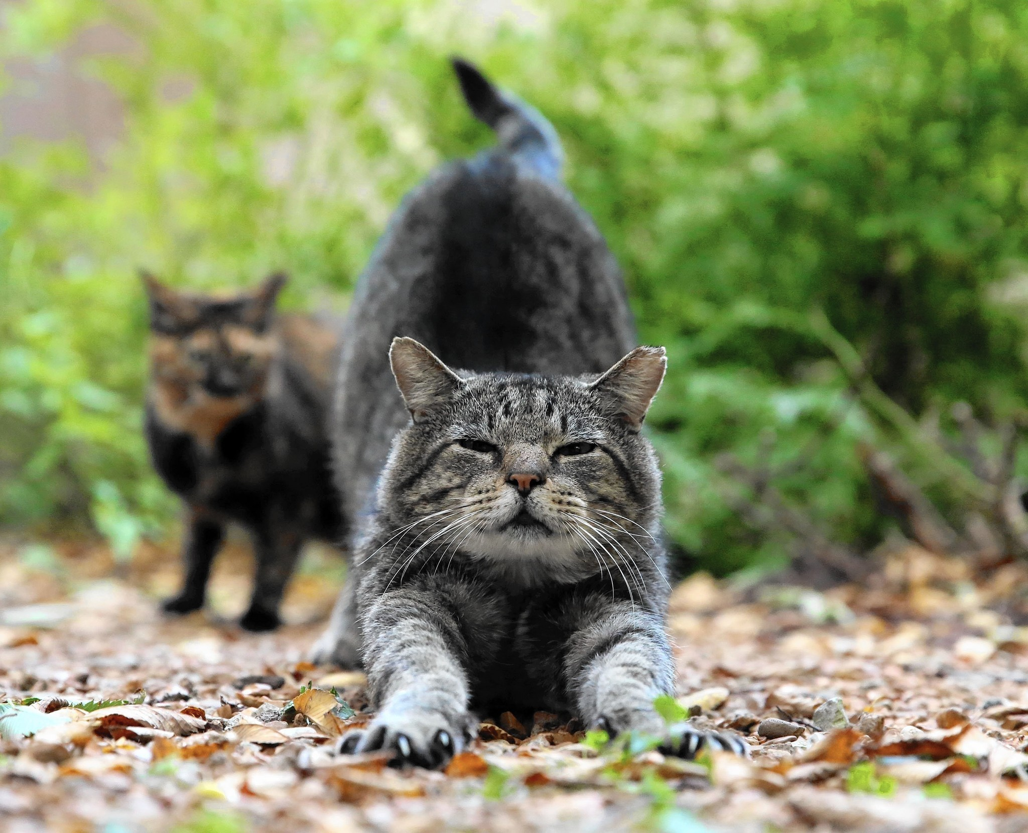 Feral cats photo