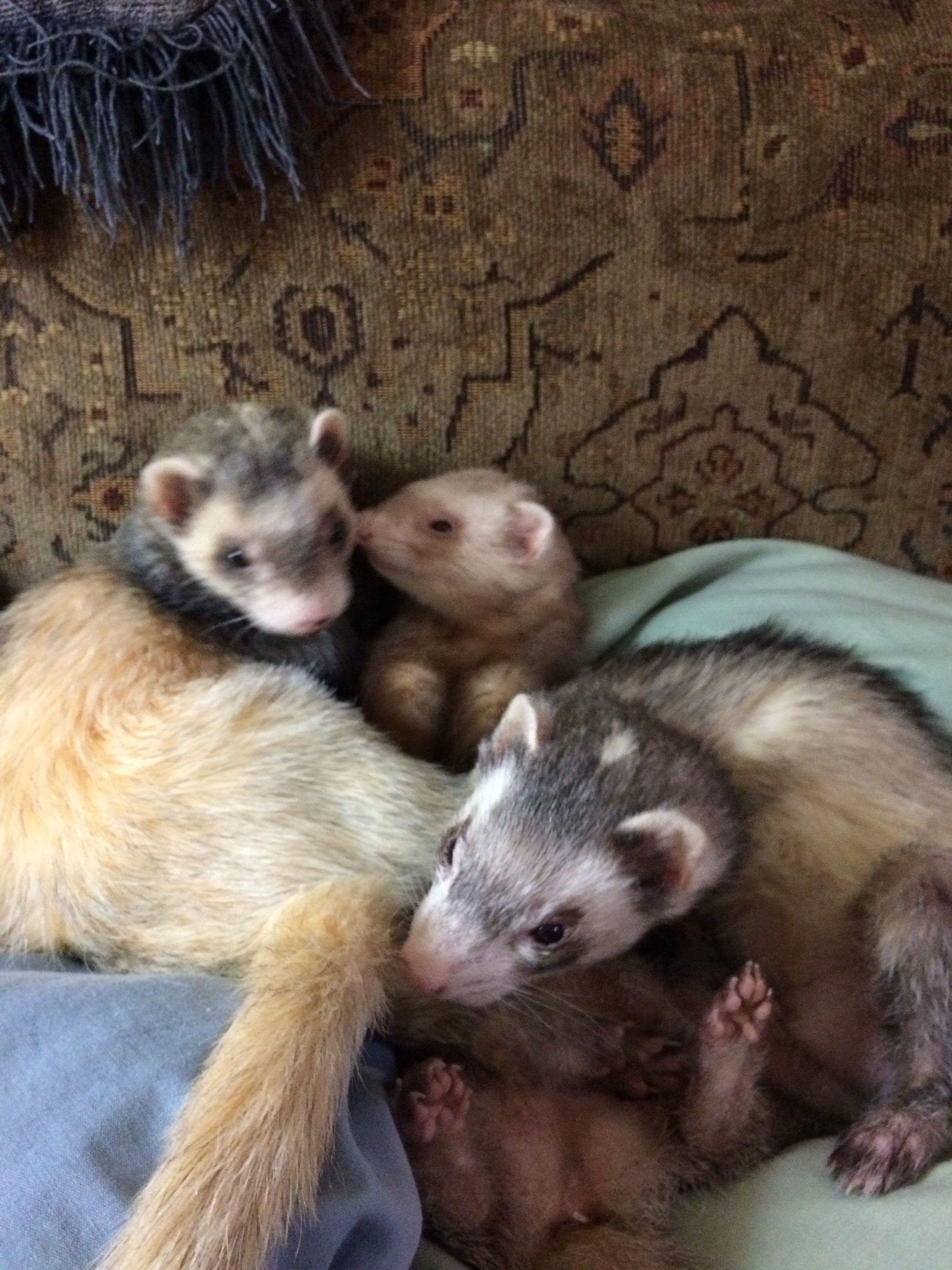 wolfy, Annie and Sparky | My life | Pinterest | Annie