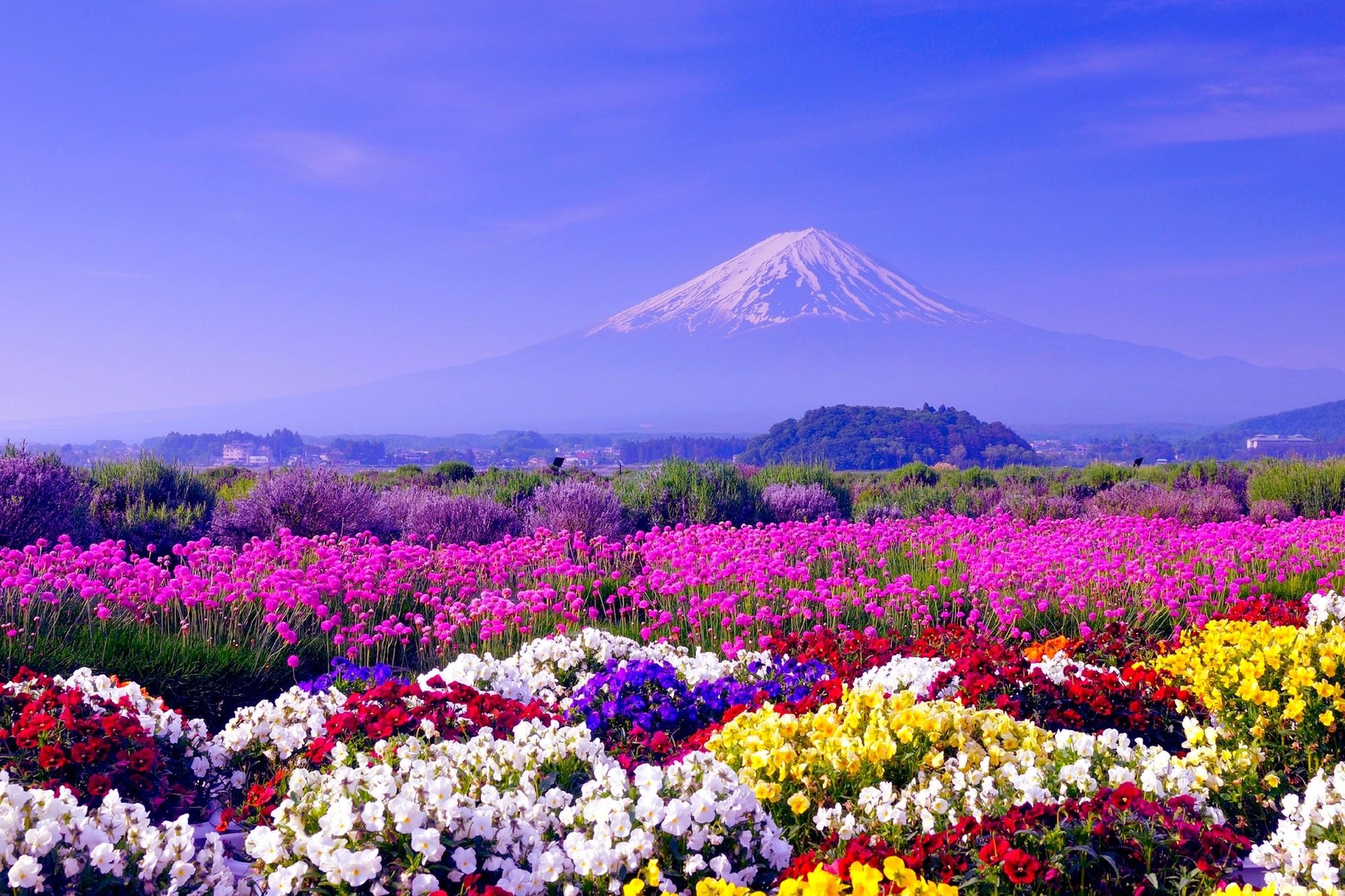 Fields: Mountain Fuji Japan Flowers Field Spring Tulip Fields Hd for ...