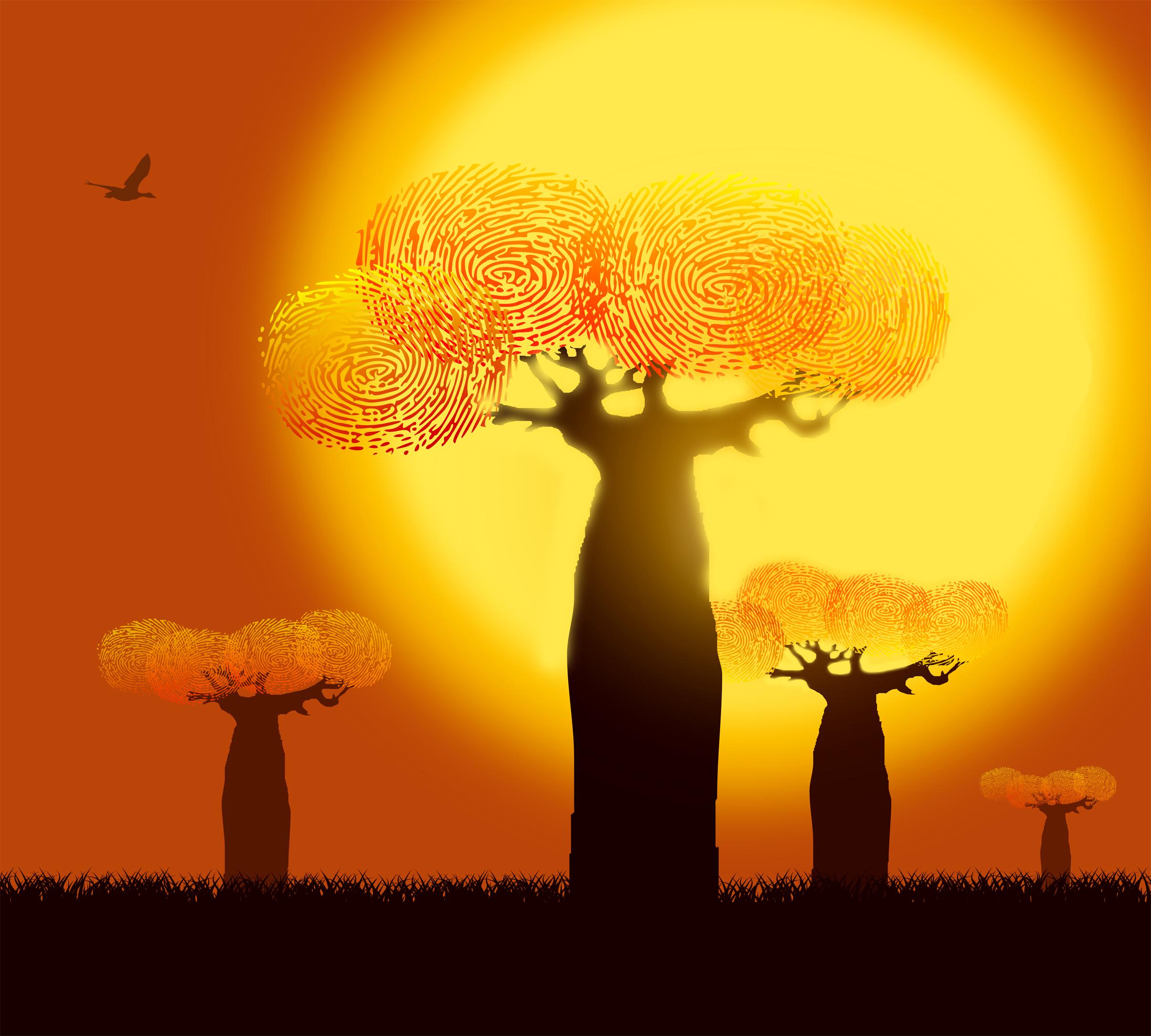 Fingerprints on baobab trees photo