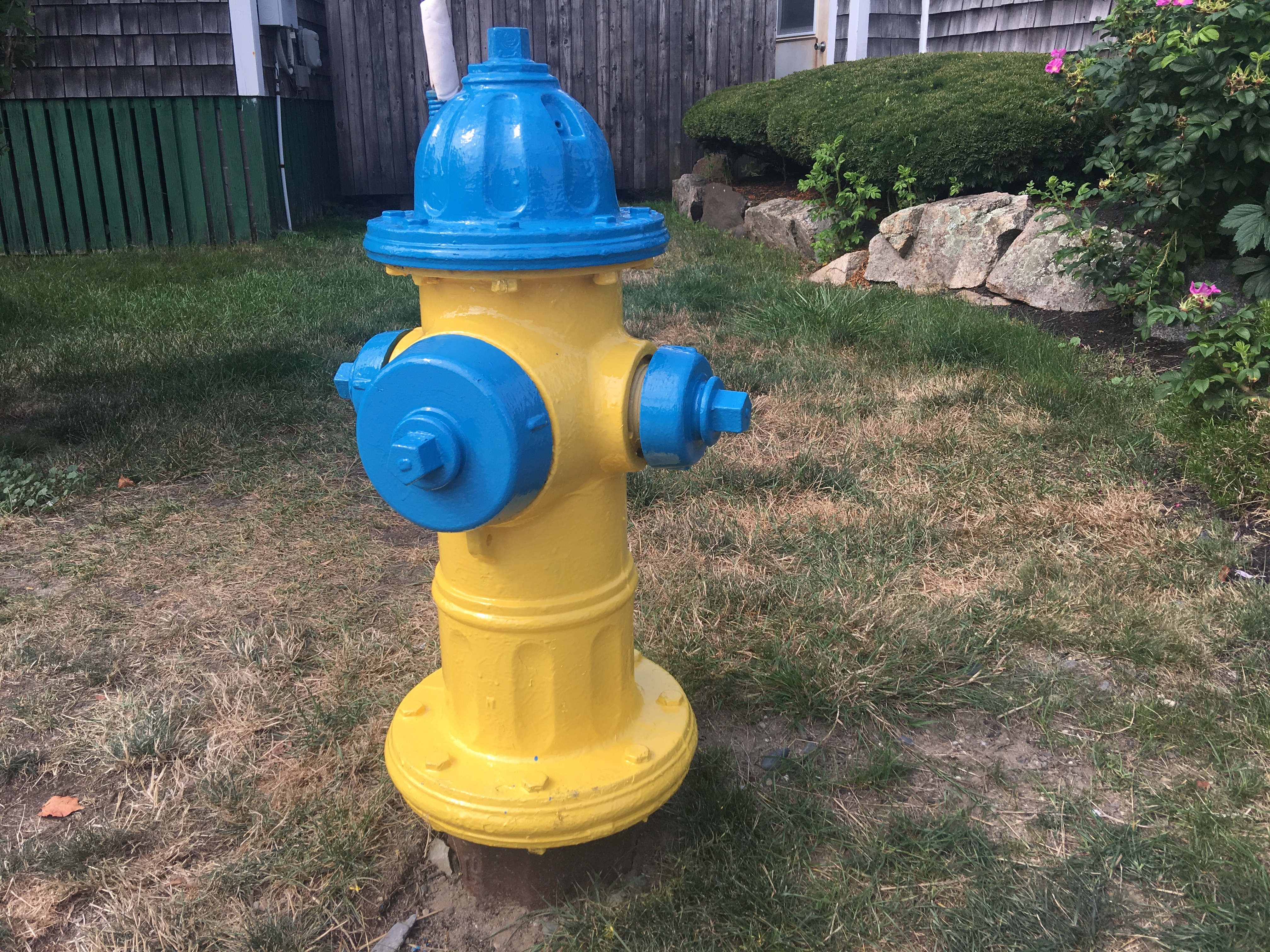 File:Yellow and Blue Fire Hydrant.jpg - Wikimedia Commons