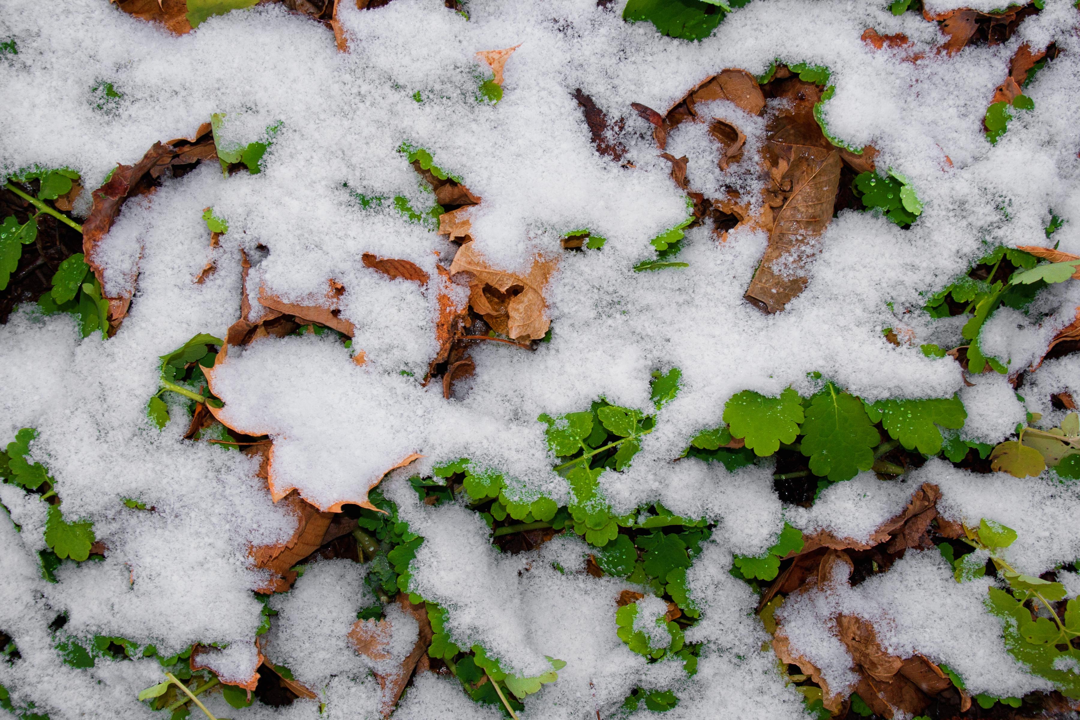 first winter snow, Autumn, Nature, White, Snow, HQ Photo
