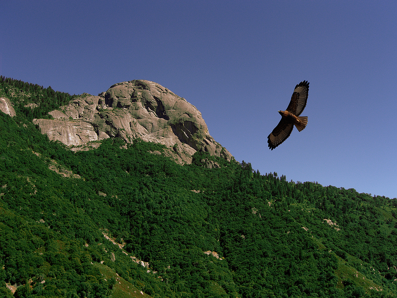 Flight of the hawk photo