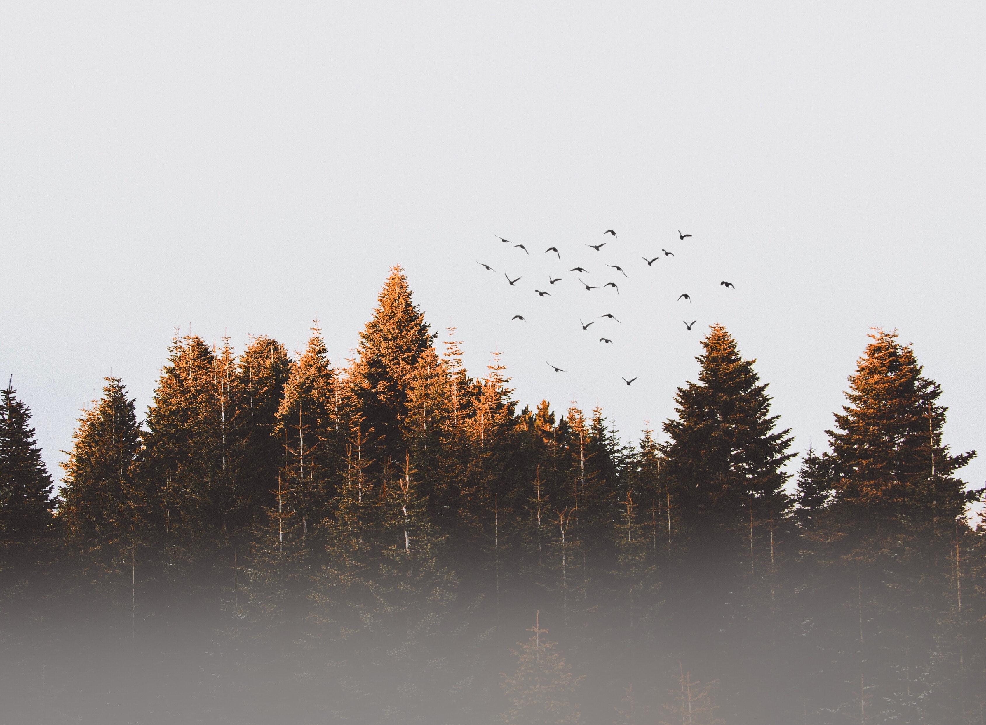 Flock of birds photo