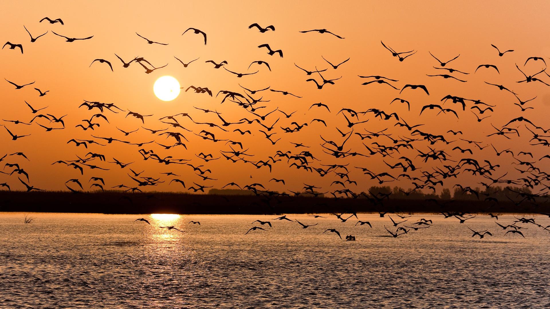 Download desktop wallpaper Flock of birds at sunset
