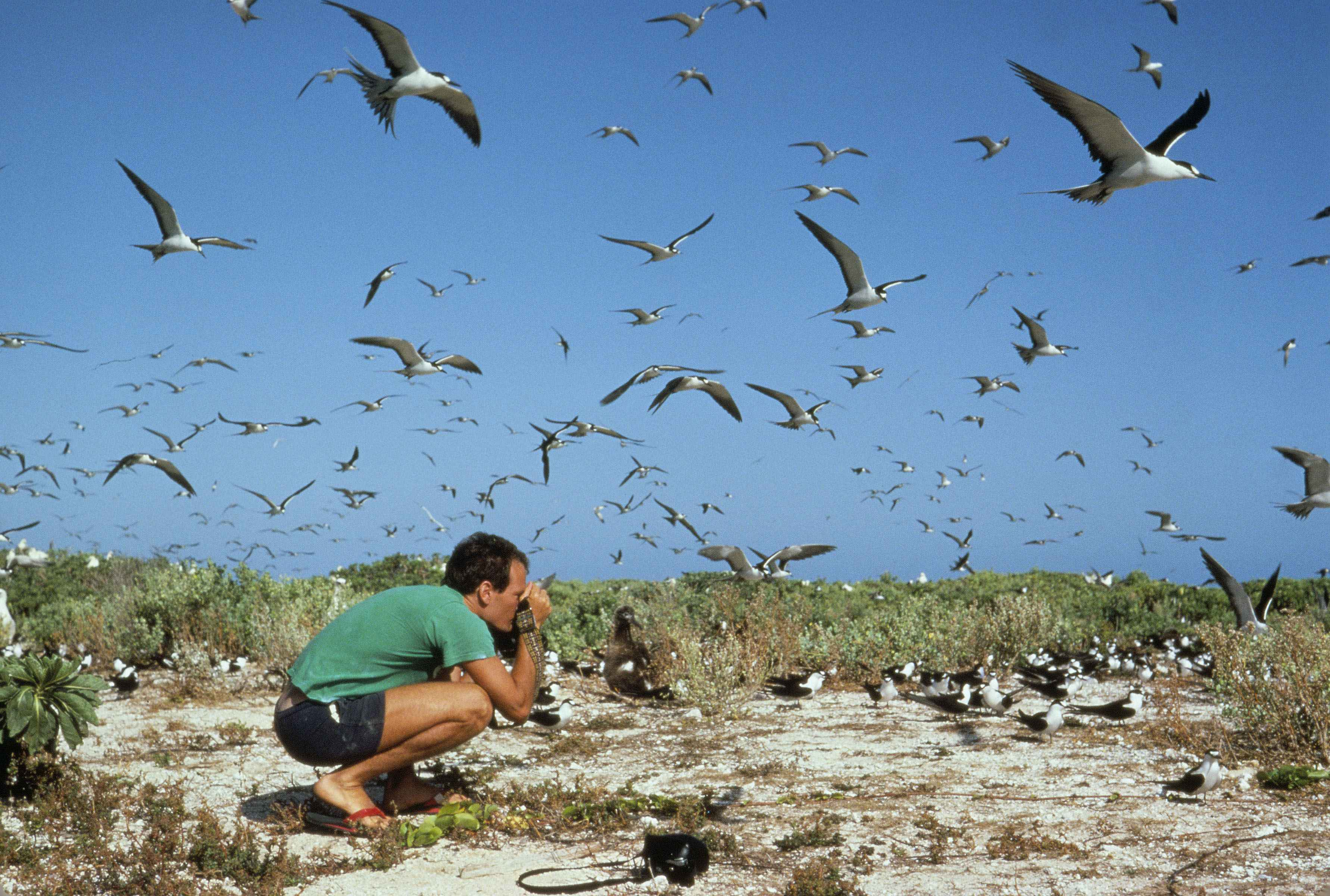 File:Photographers in a flock of birds.jpg - Wikimedia Commons